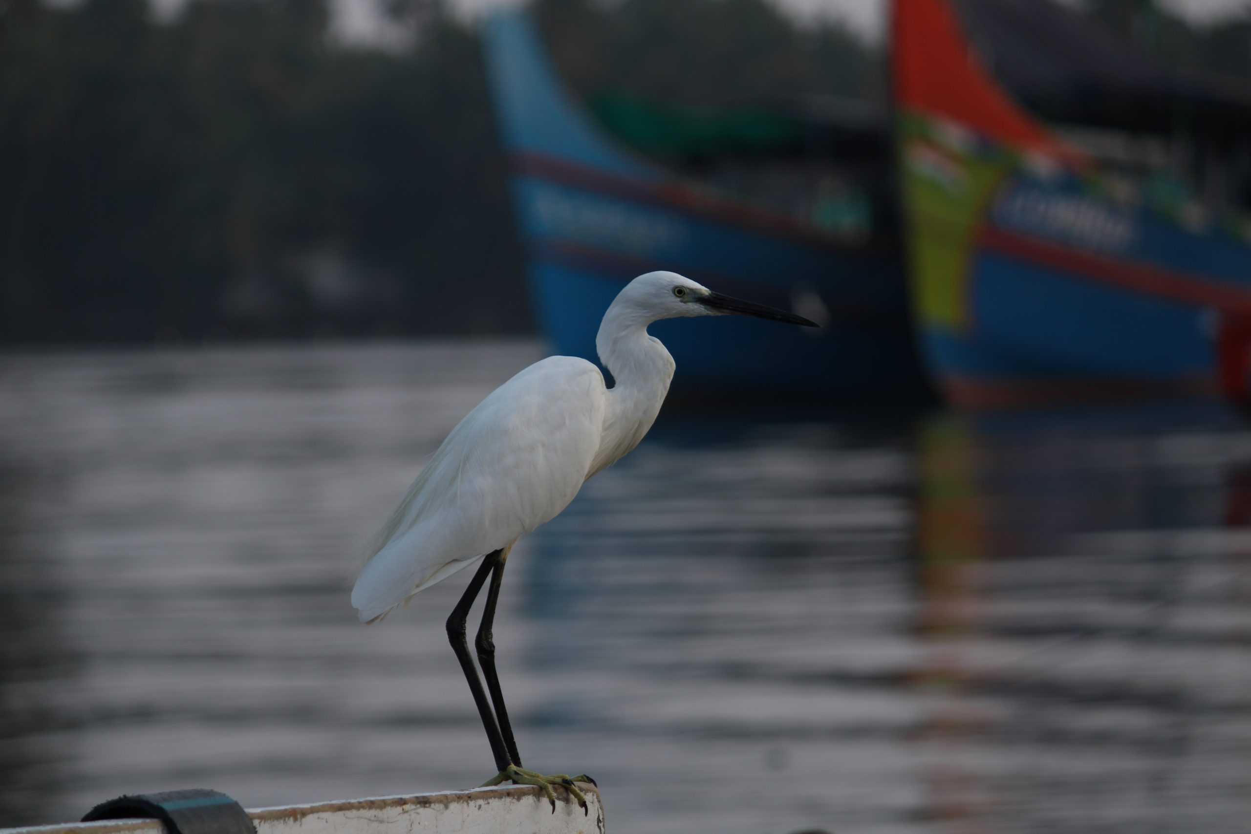 Crane bird sitting on boat in the river
