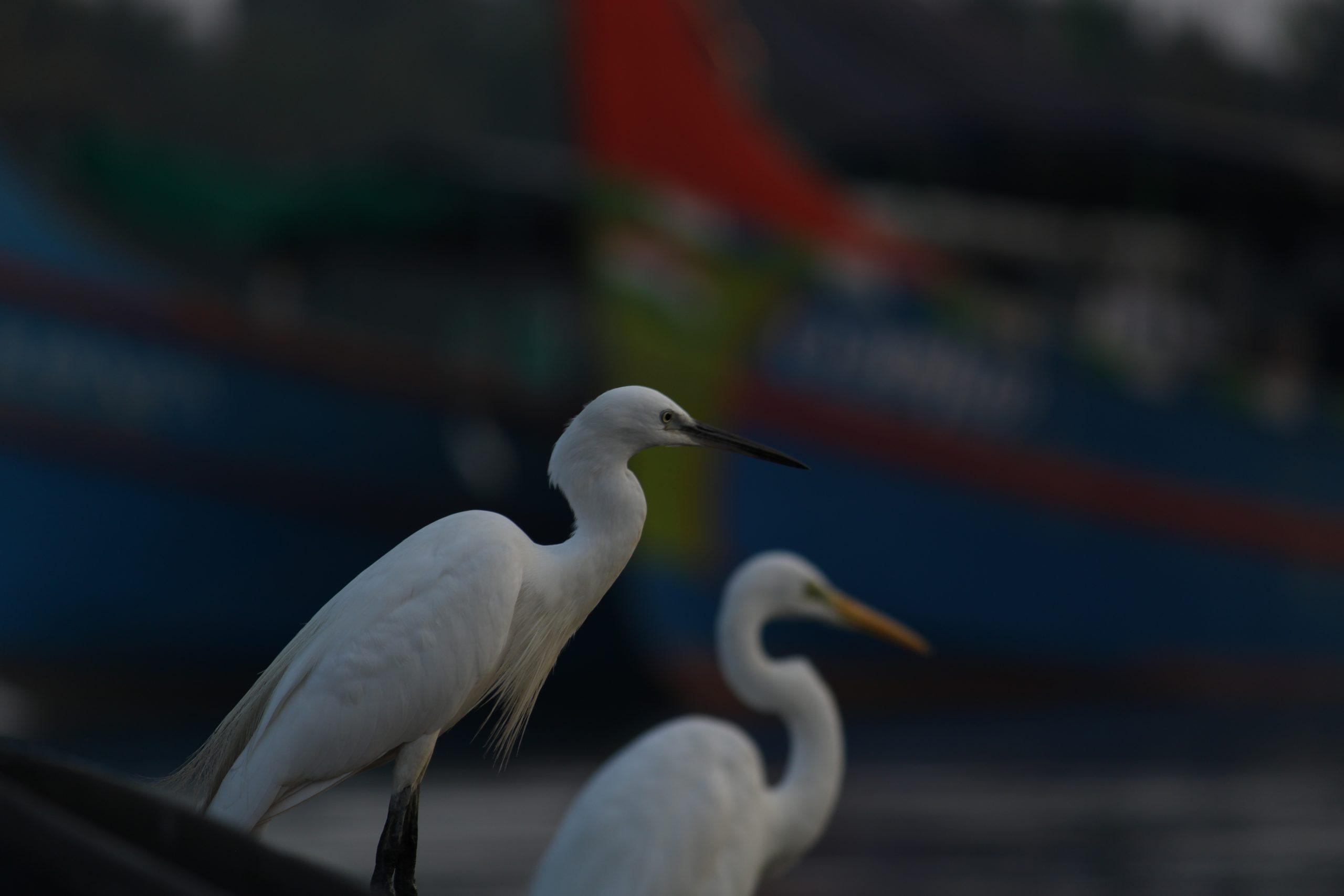 Crane birds sitting river side