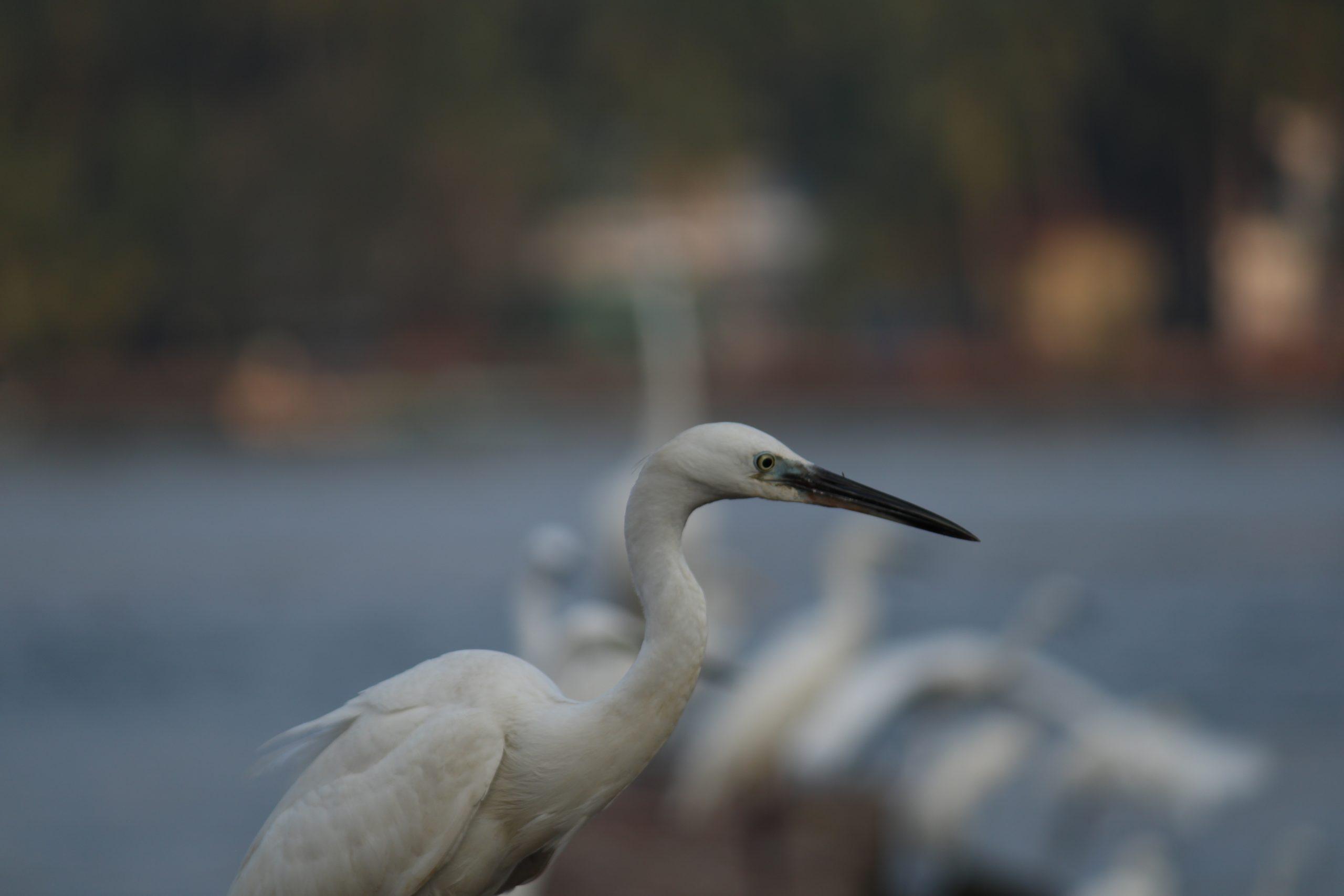 Crane near the river