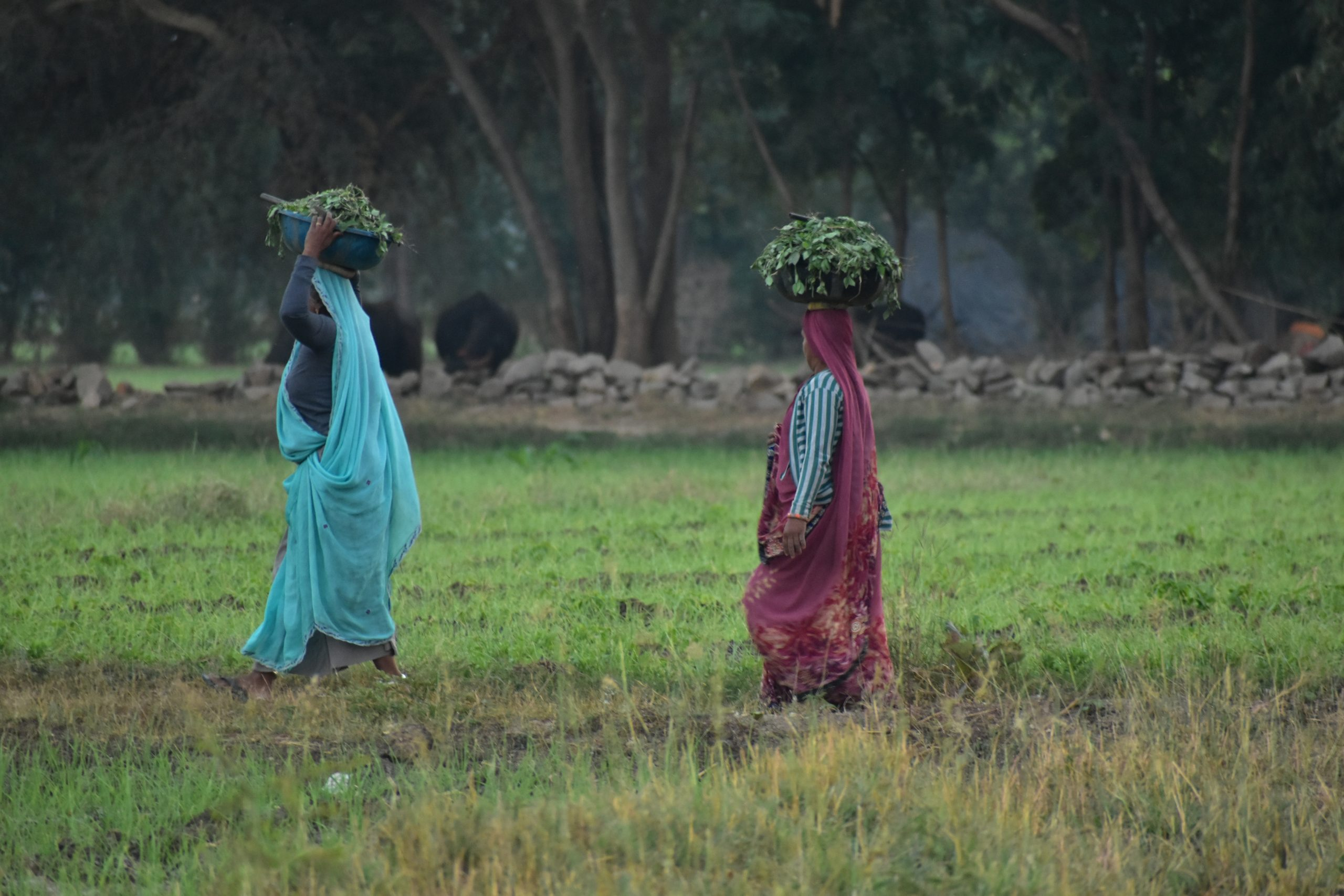 Lady farmers