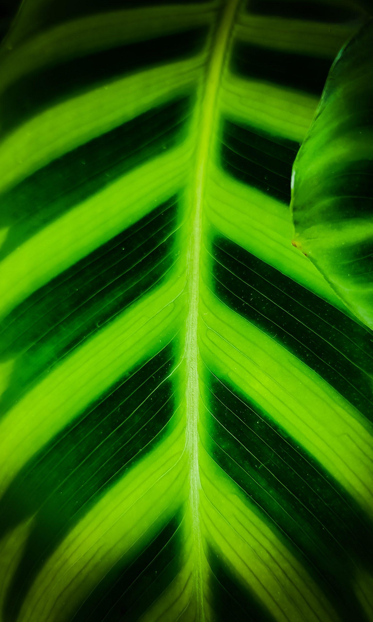 Macro view of leaf