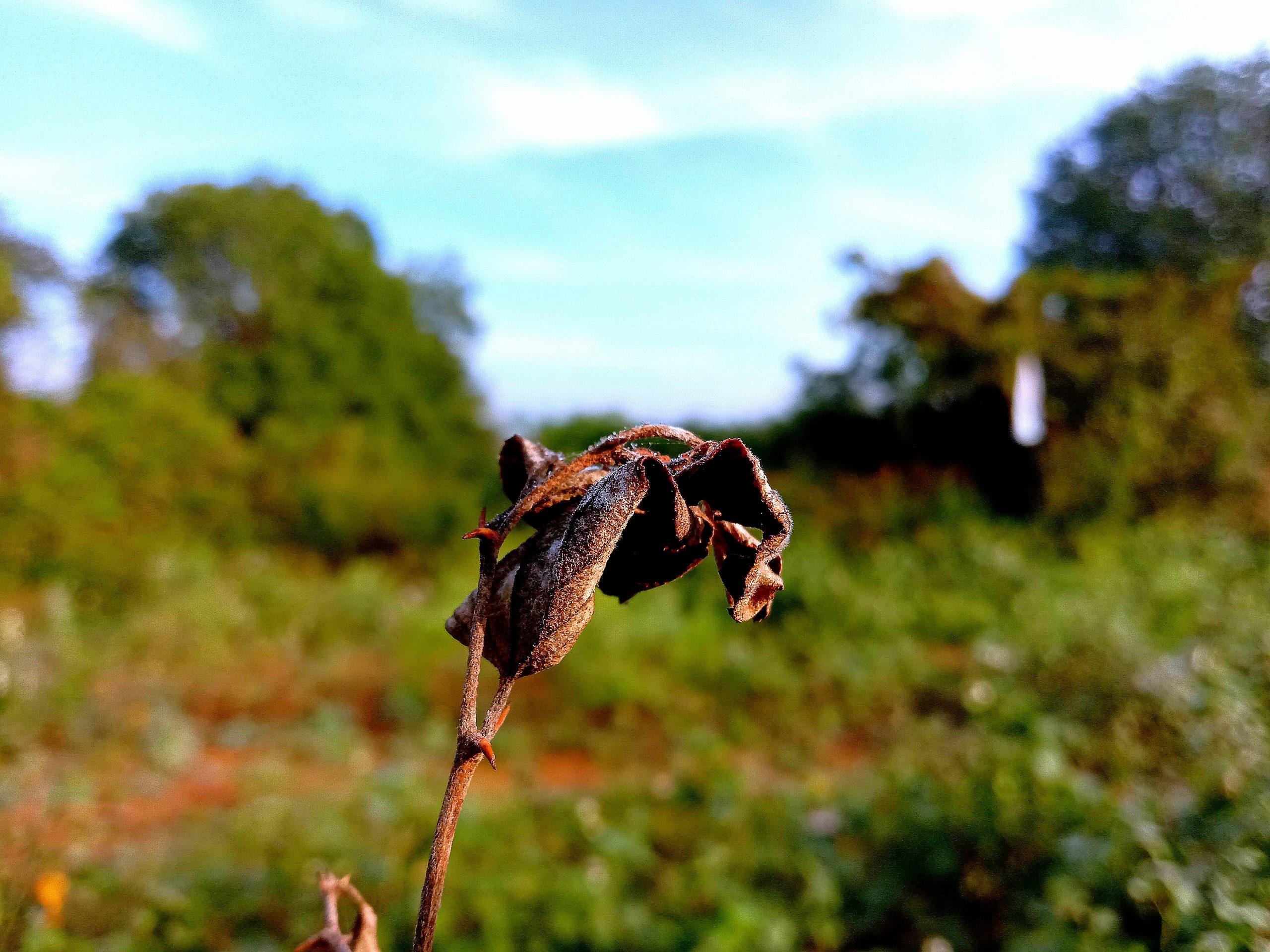 Dry leaf of a plant