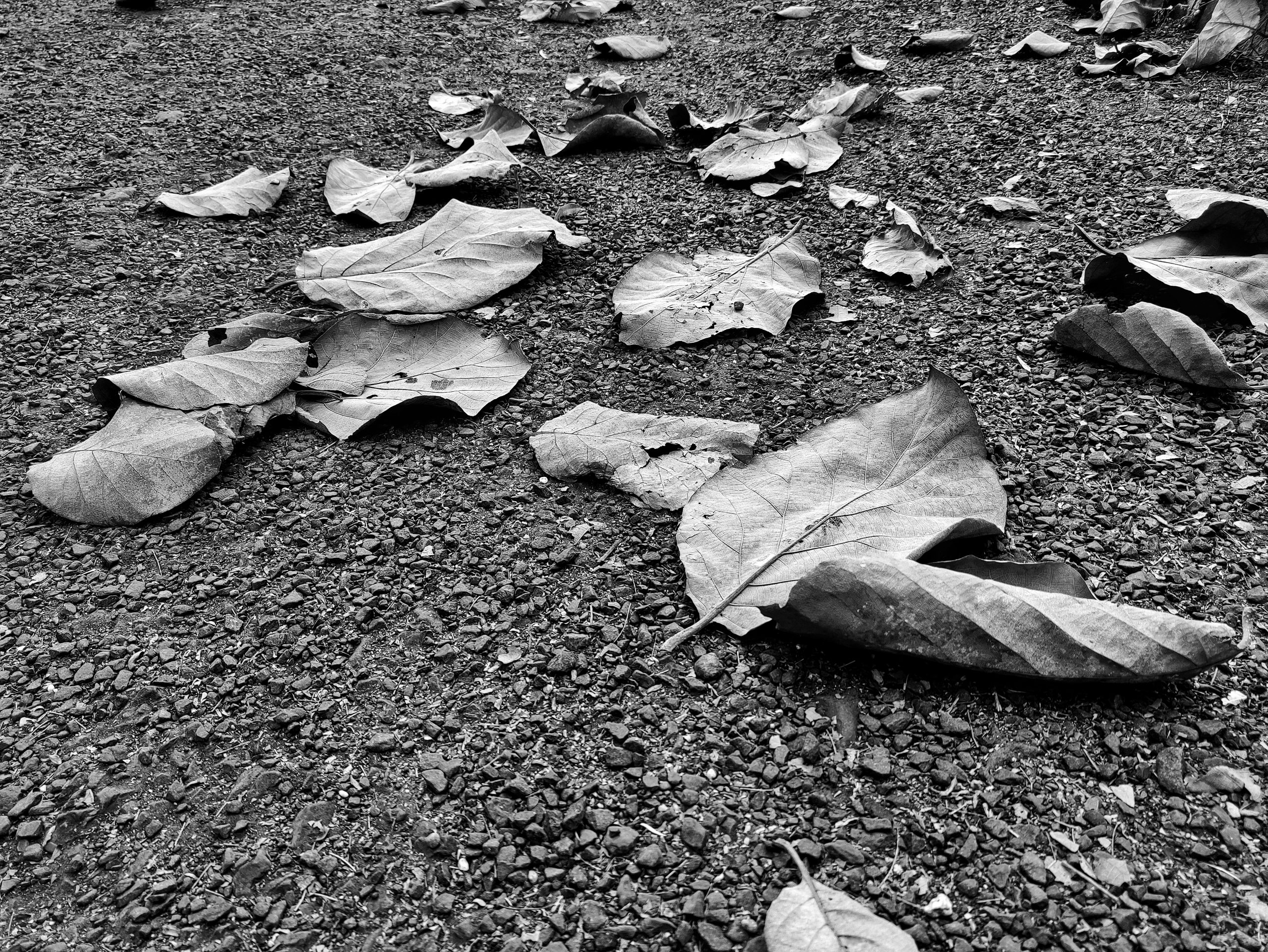 Dry leaves on road