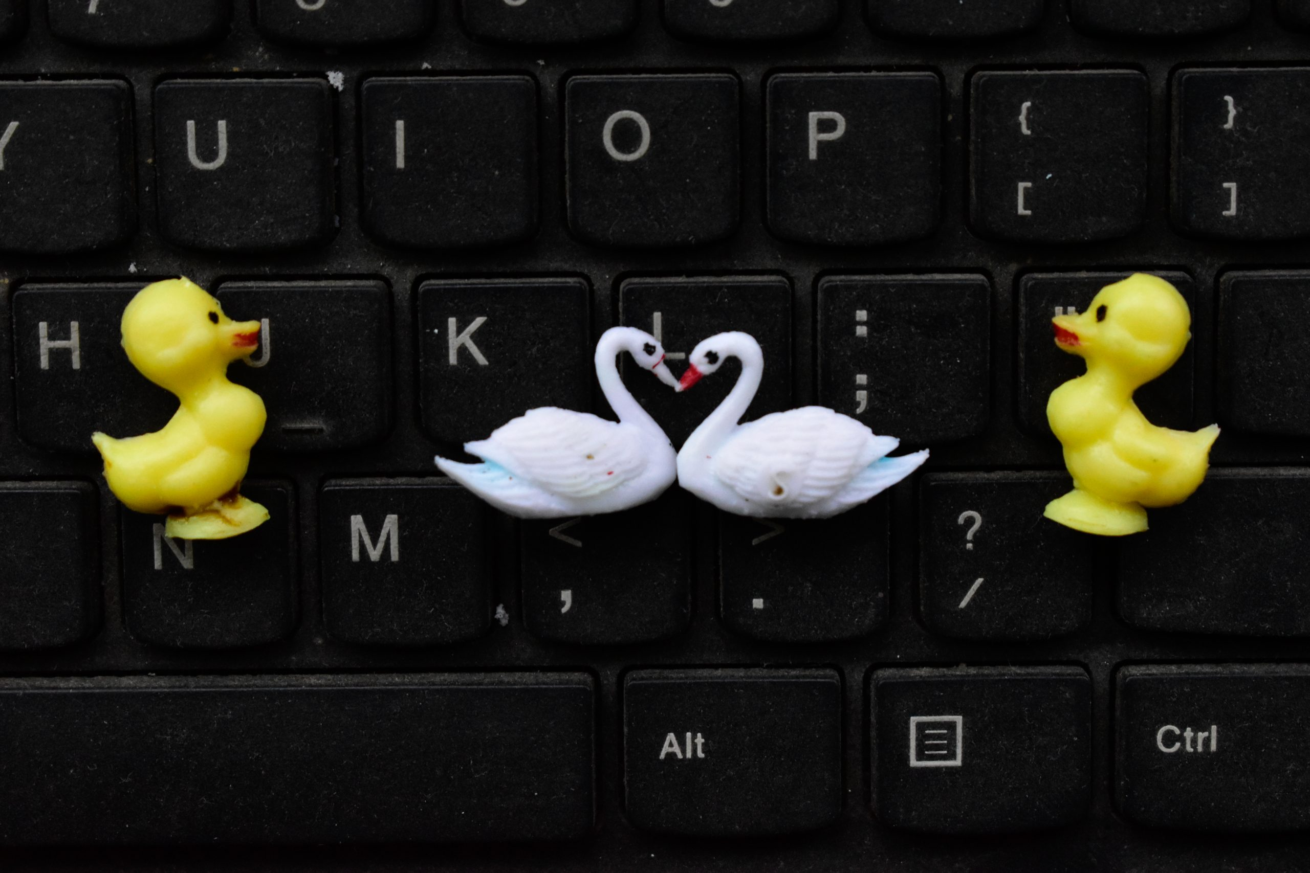 Duck toy on keyboard