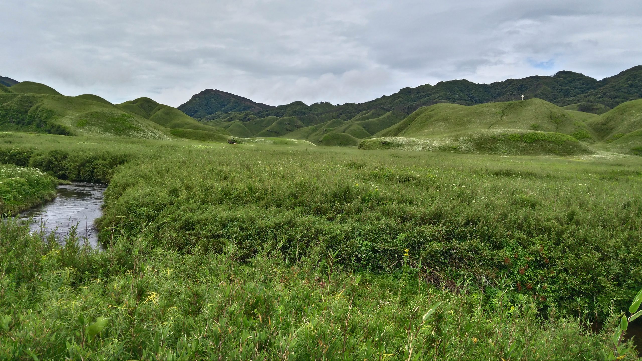 Dzukuo Valley, Nagaland