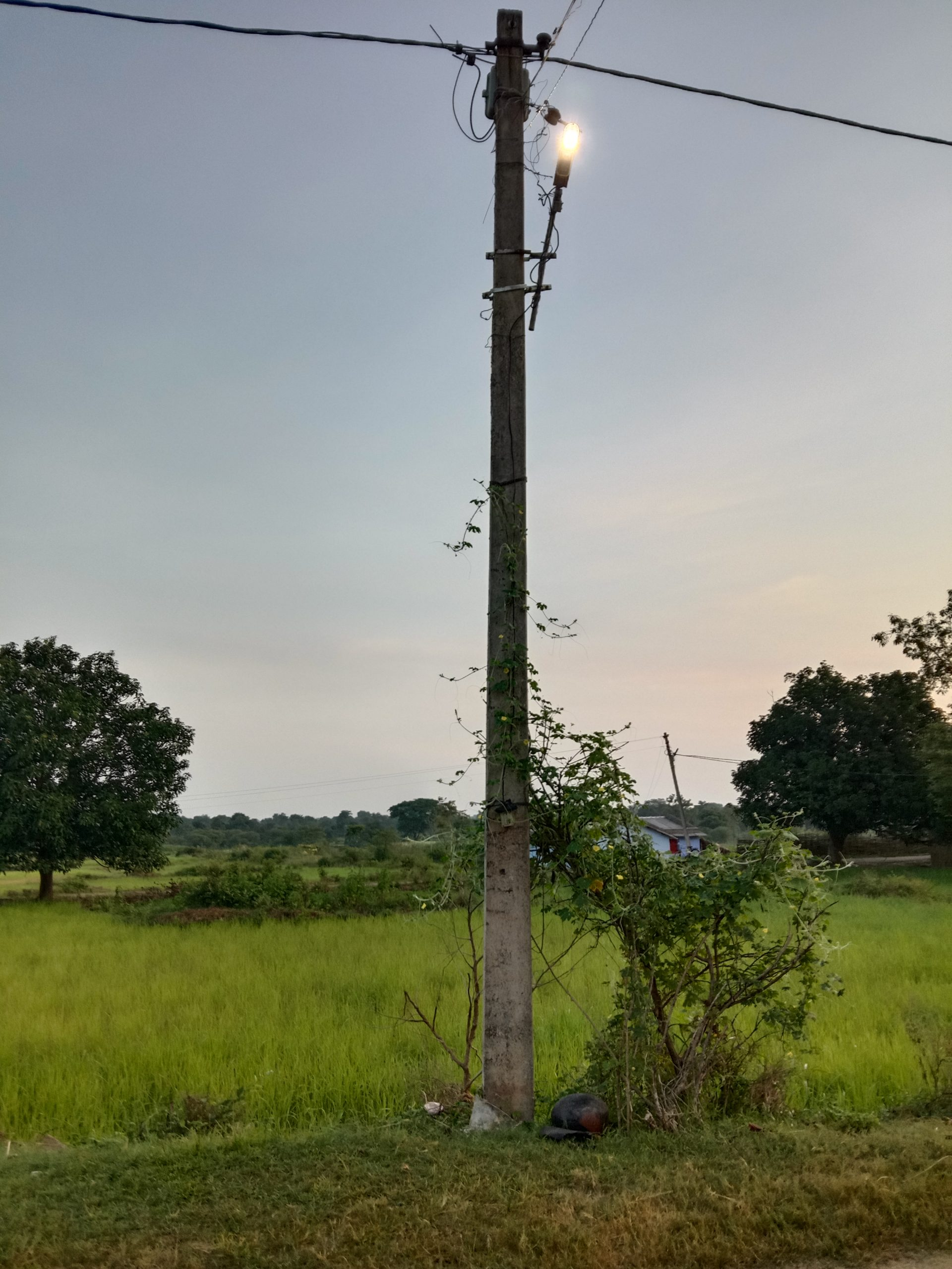Electric pole in farm