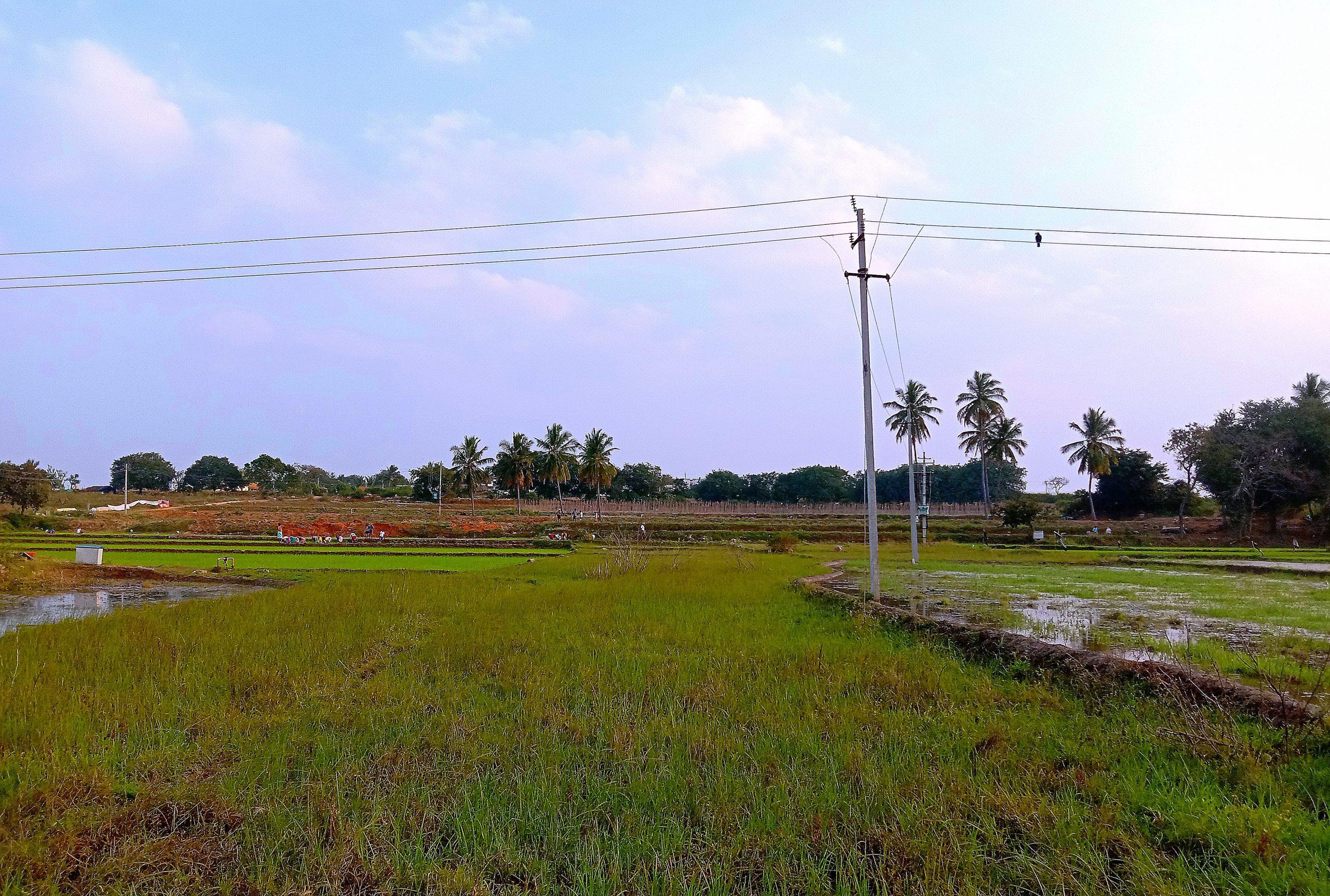 Electric pole in the farm