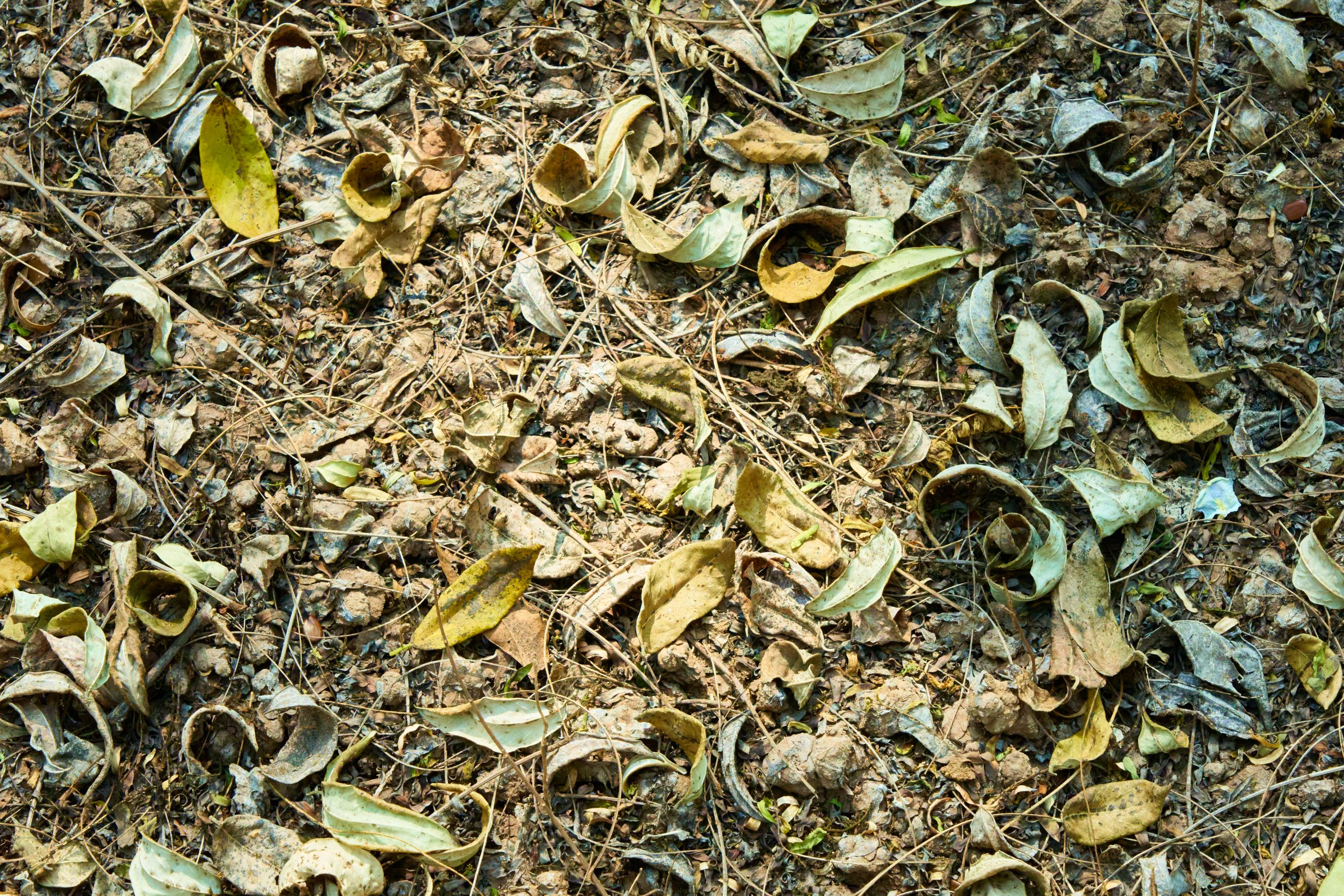 Fallen leaves of a plant