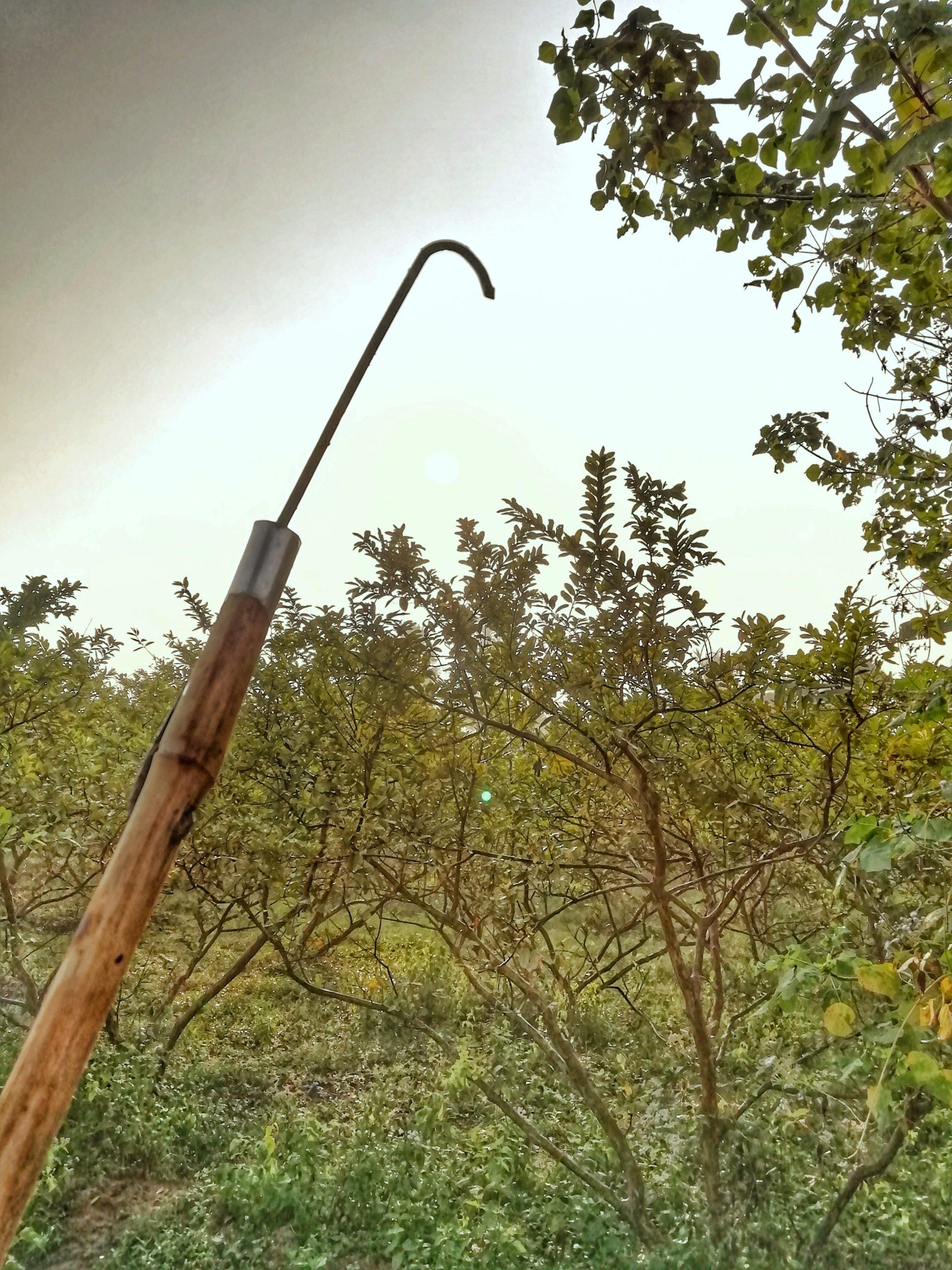 Hose in a stick at farm