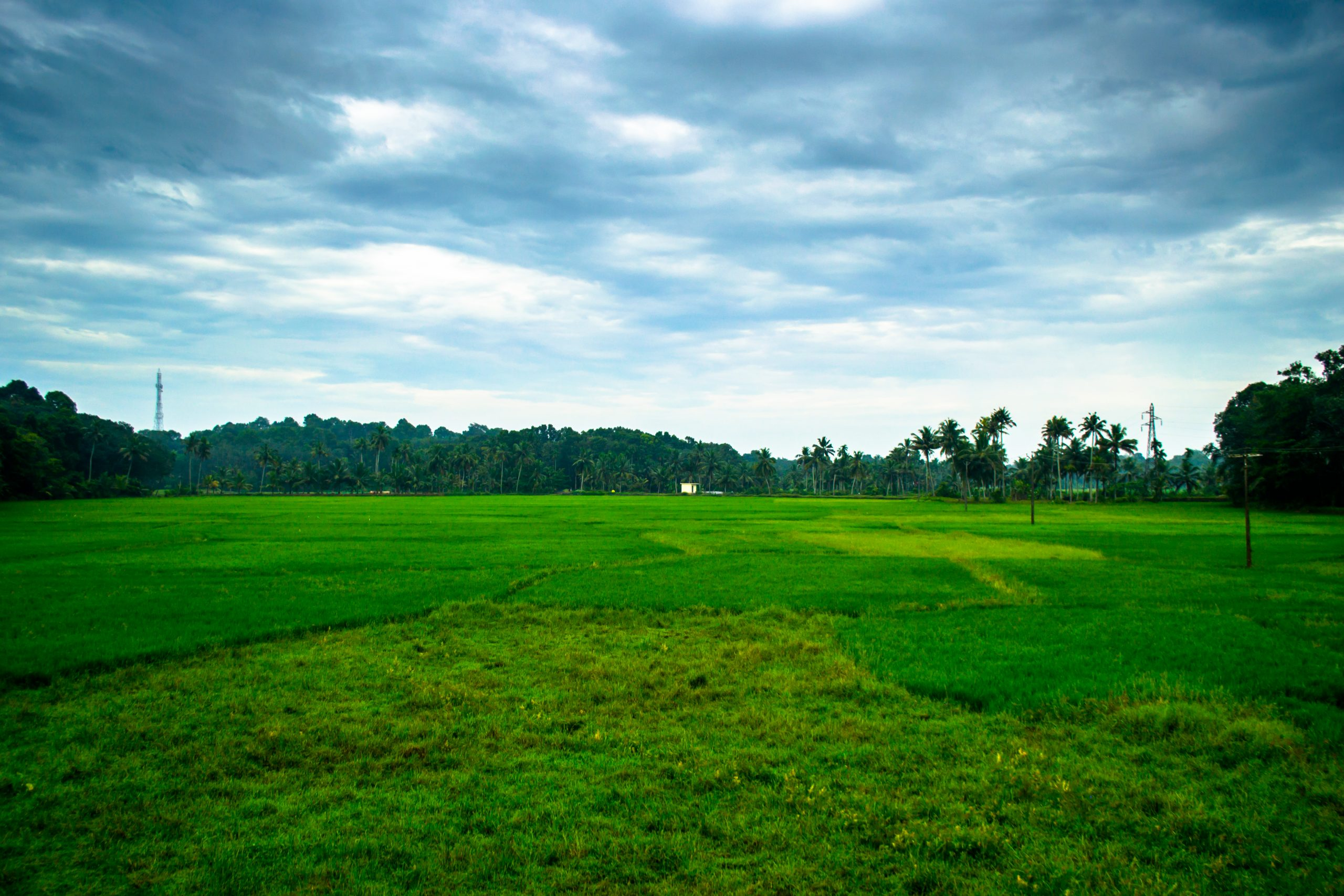 Fields of Pathanamthitta village