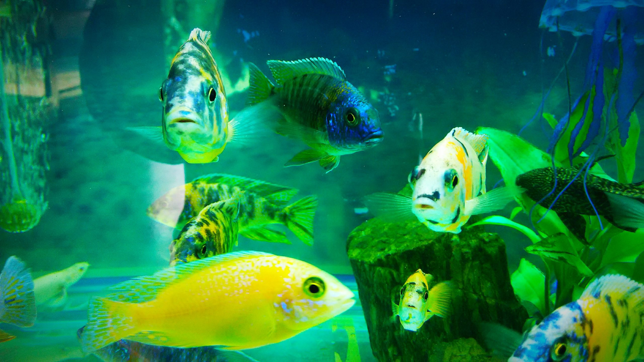 Beautiful and colorful fishes in the aquarium