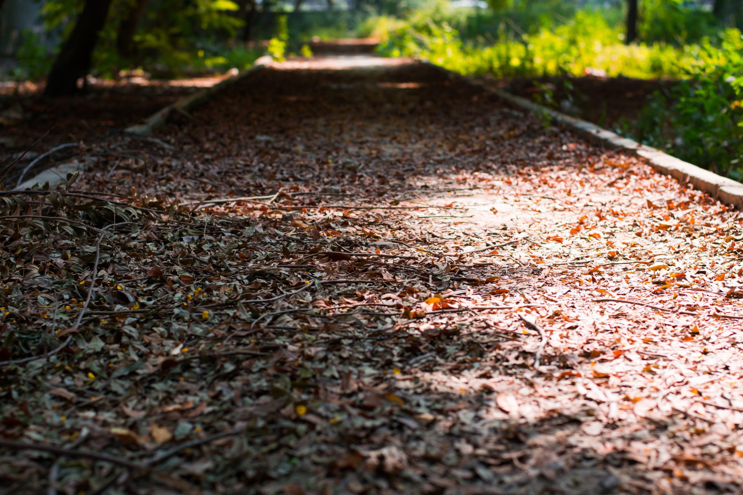 Foliage on a walkway