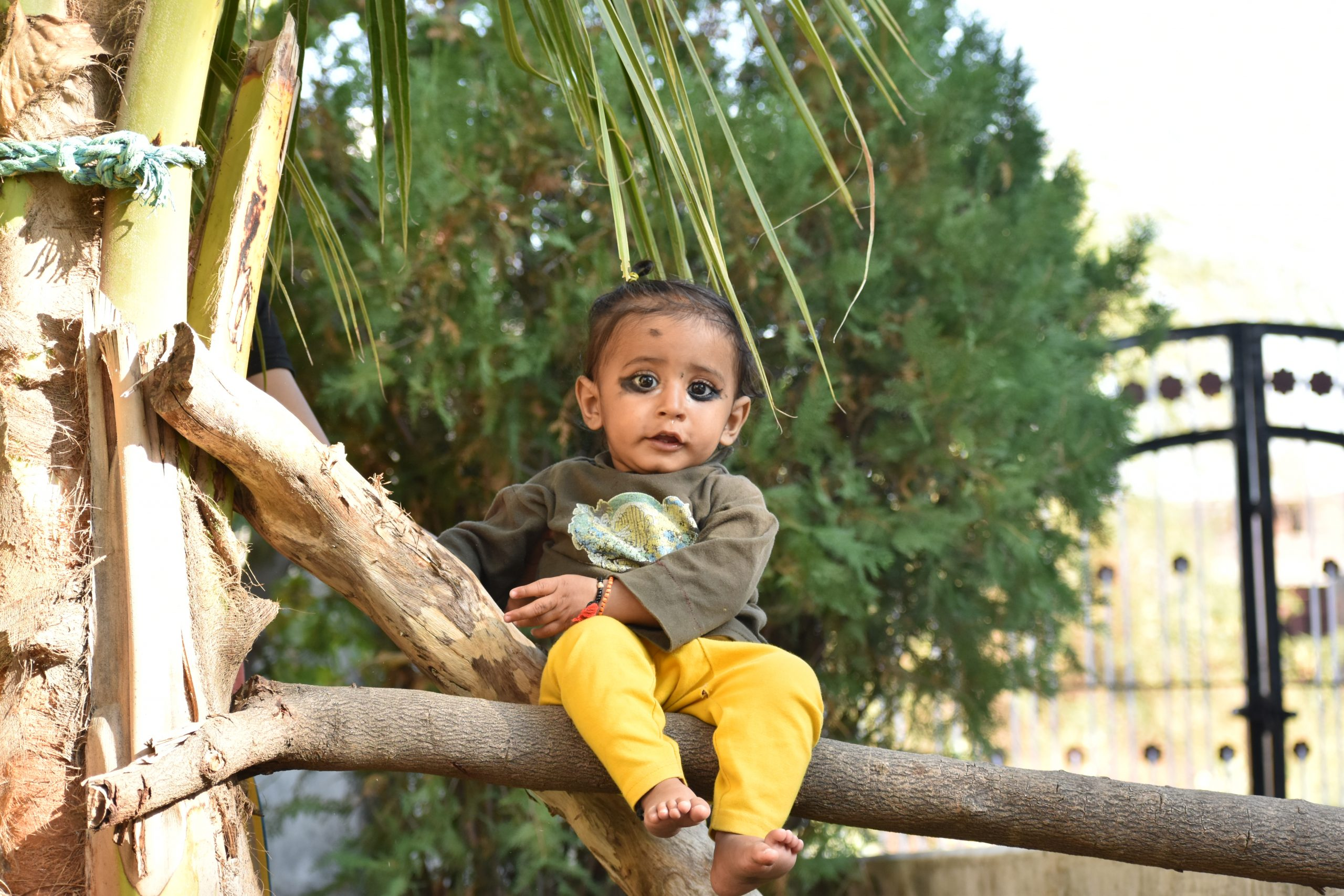 baby sitting on a branch