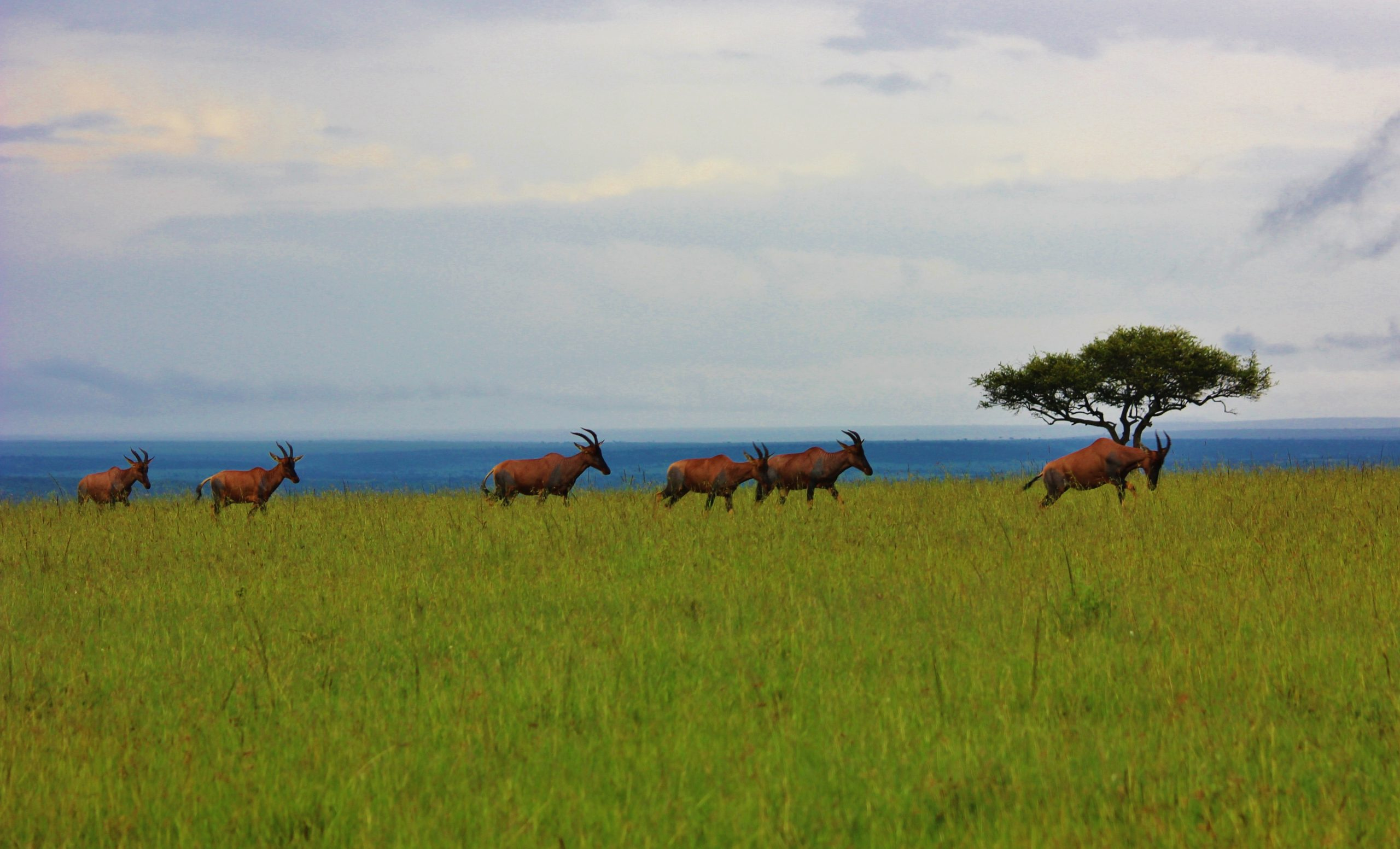 Grassland of Masai Mara