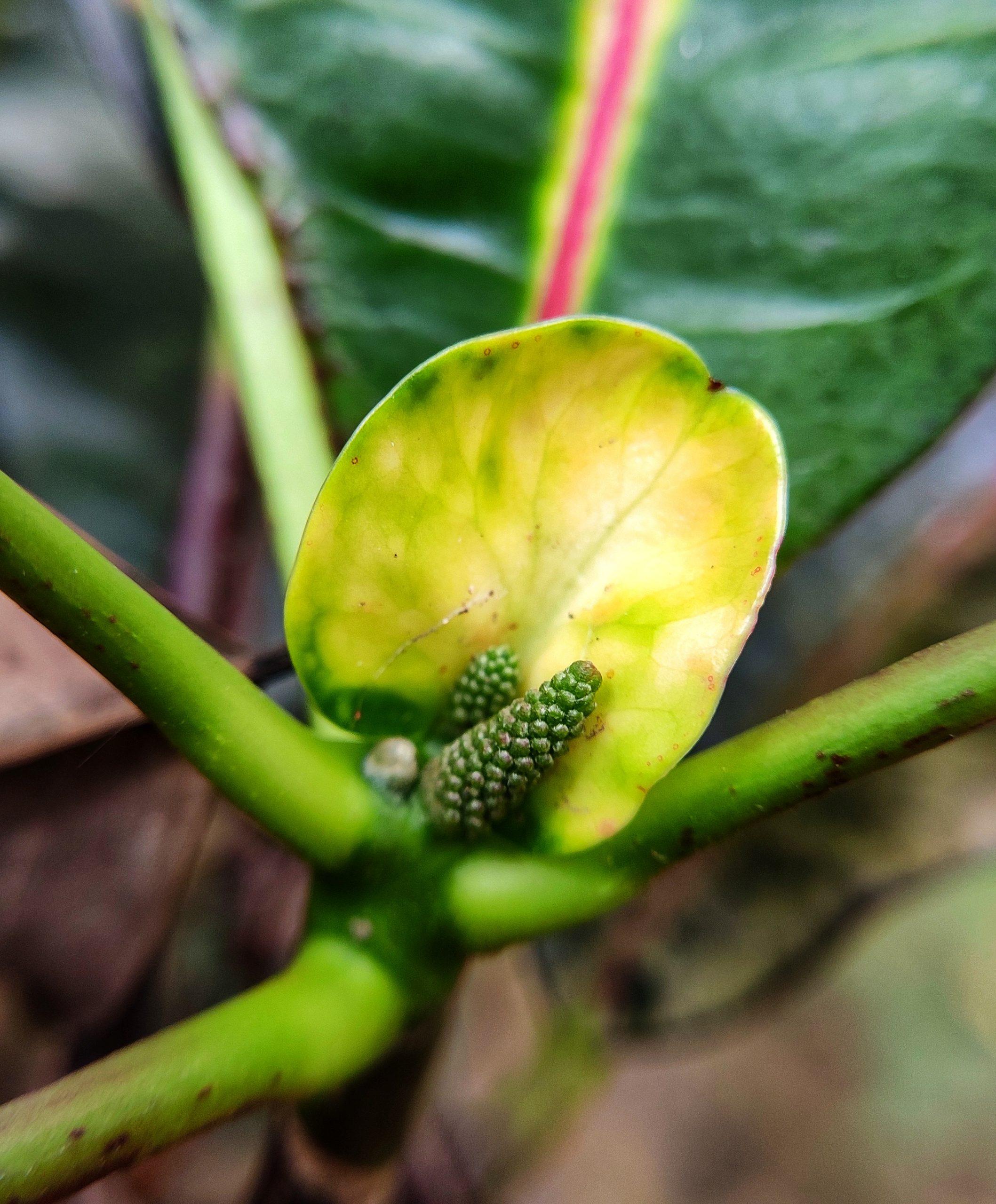 Green leaf and bud
