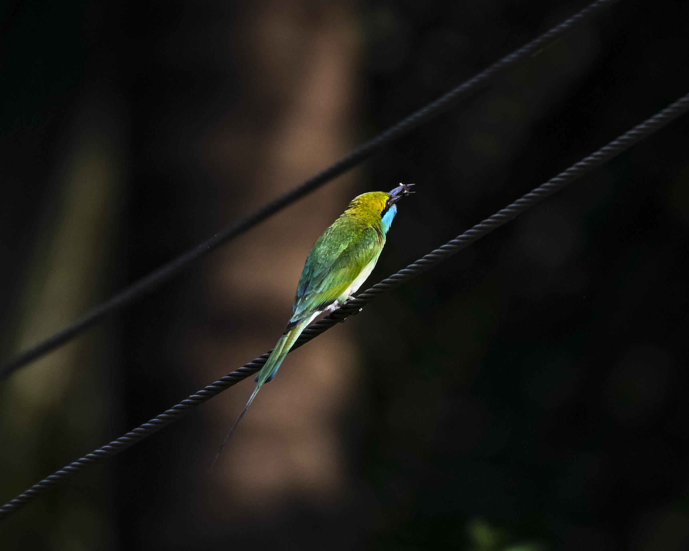 bird on a rope