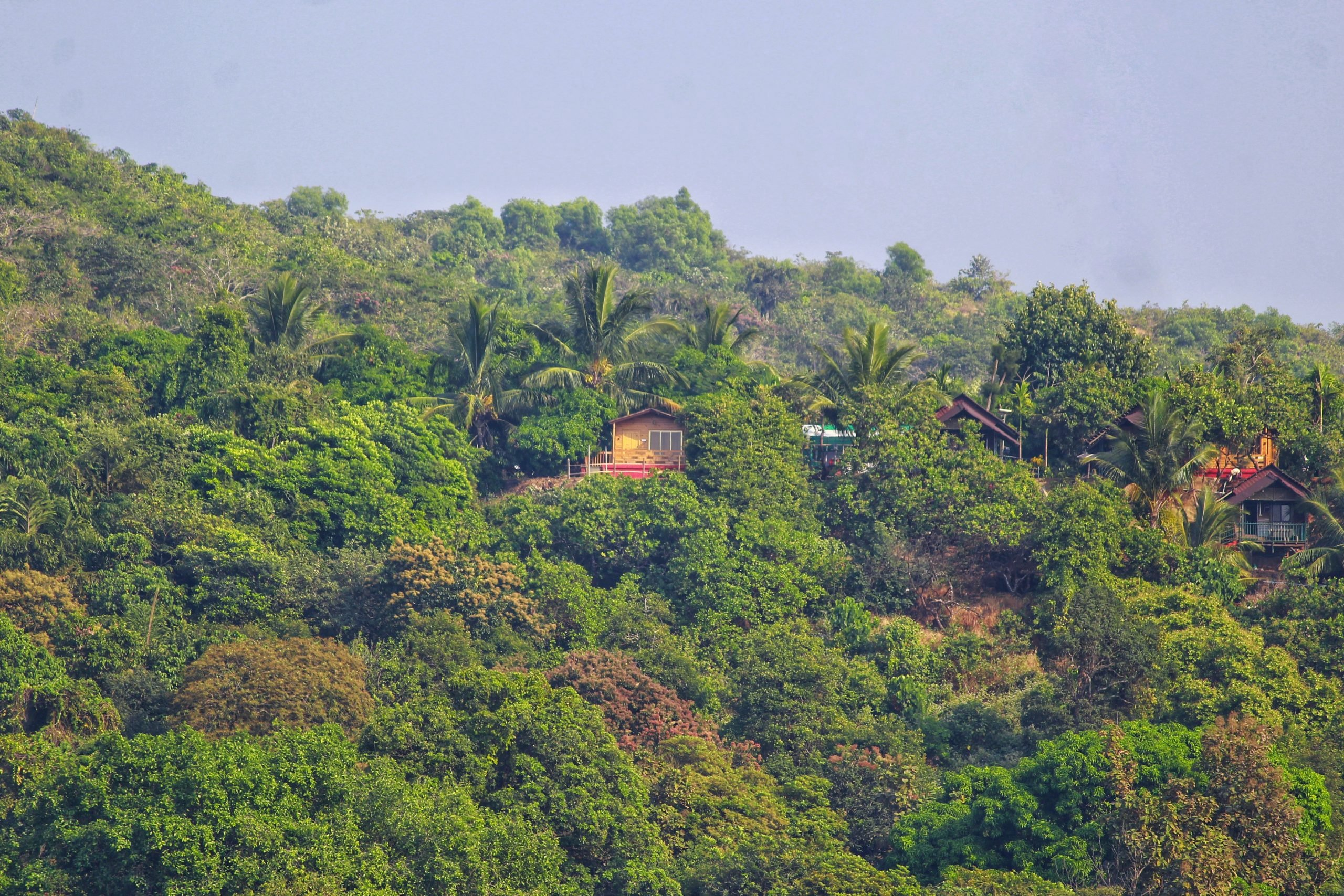 Home among greenery