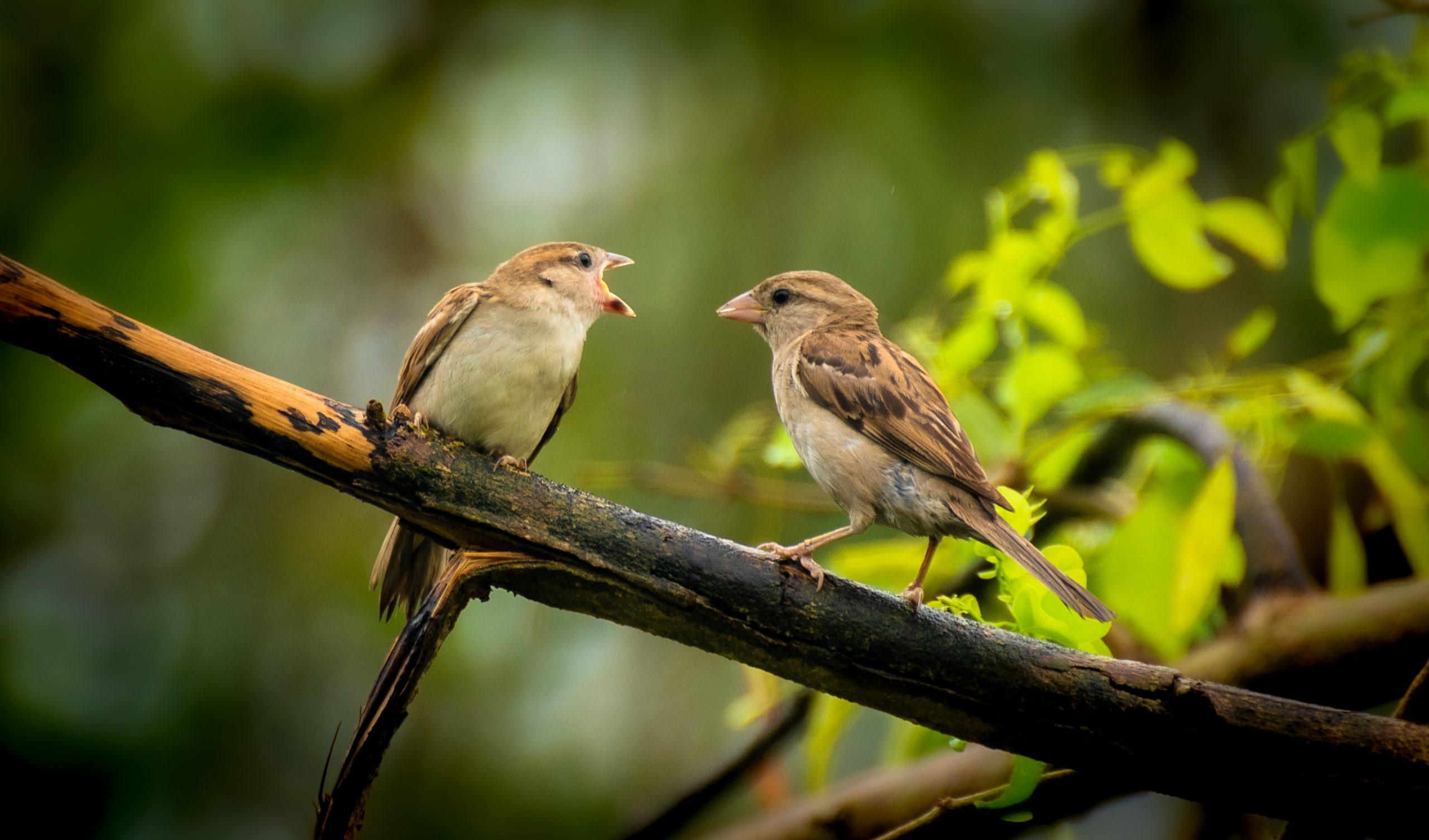 Two birds seem like fighting