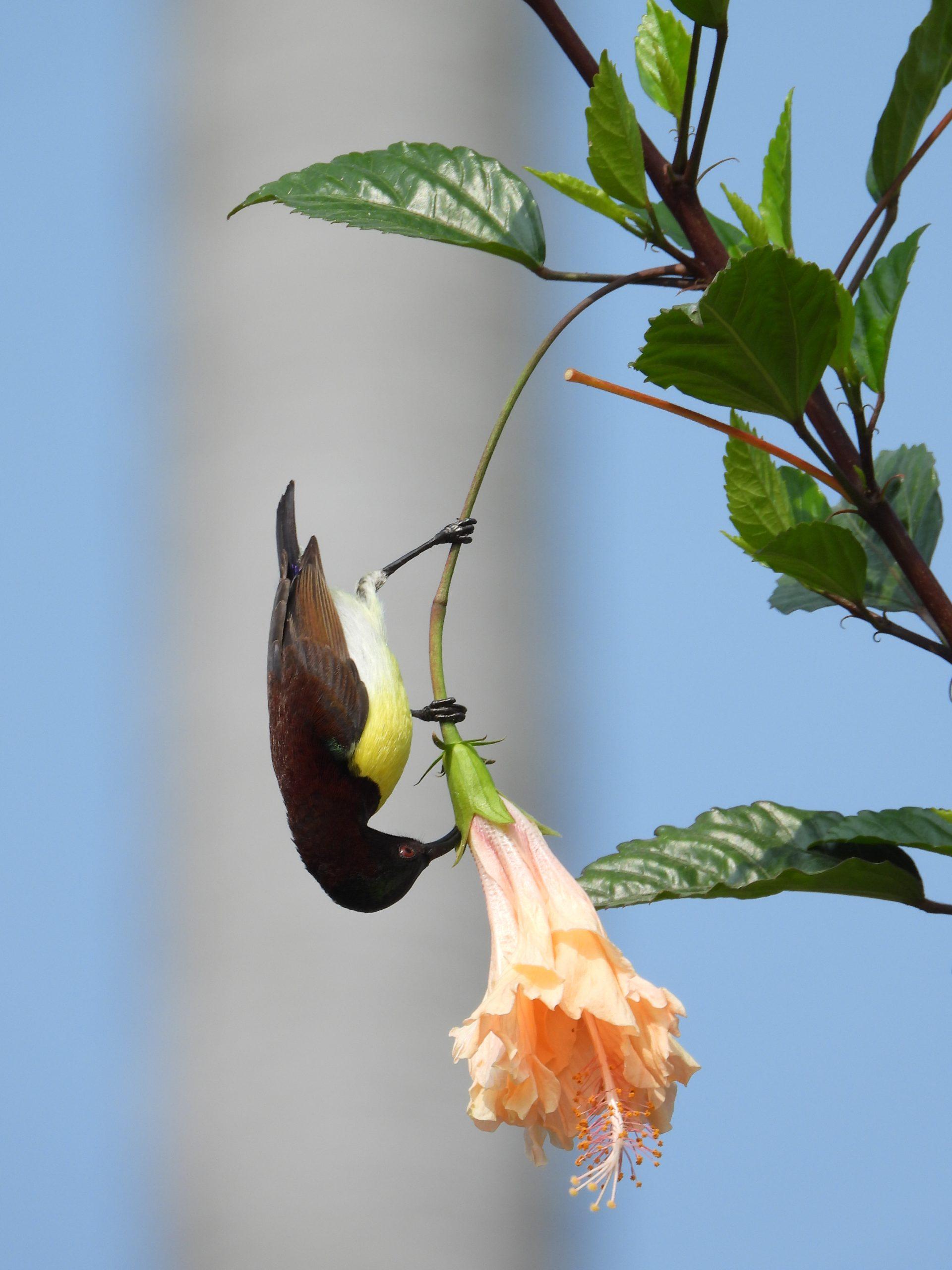 Hummingbird on a flower
