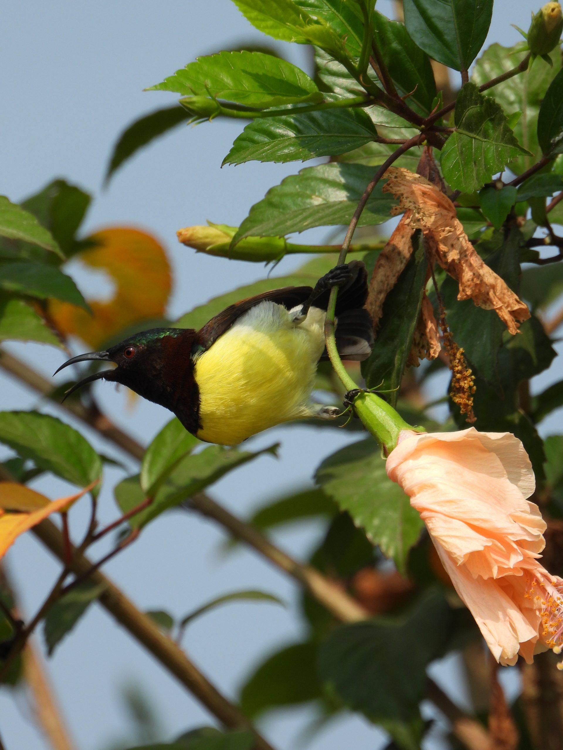 Hummingbird on a plant