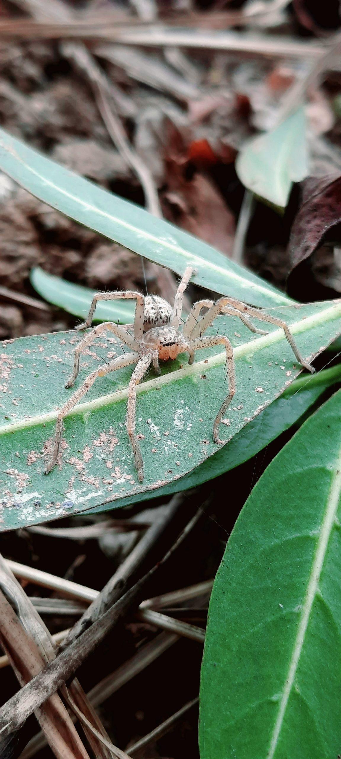 White spider sitting on a leaf