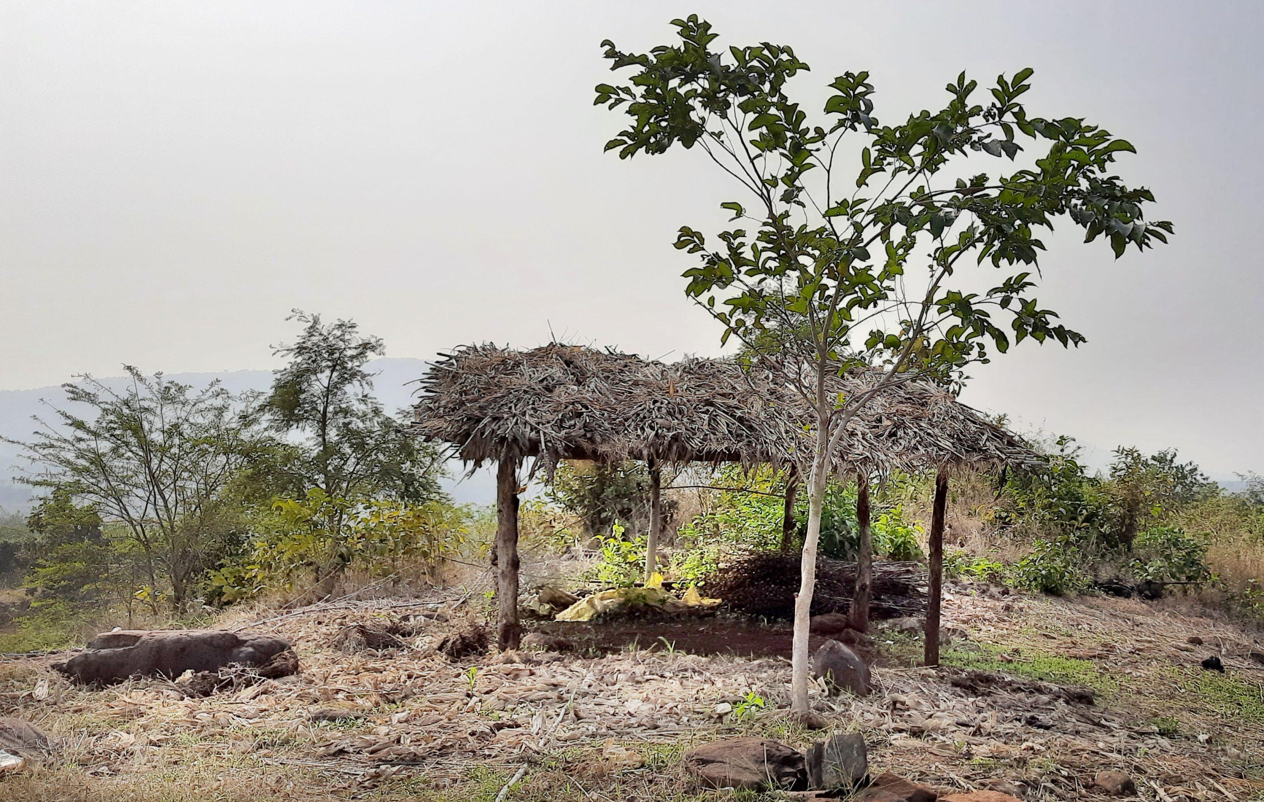 Hut and tree