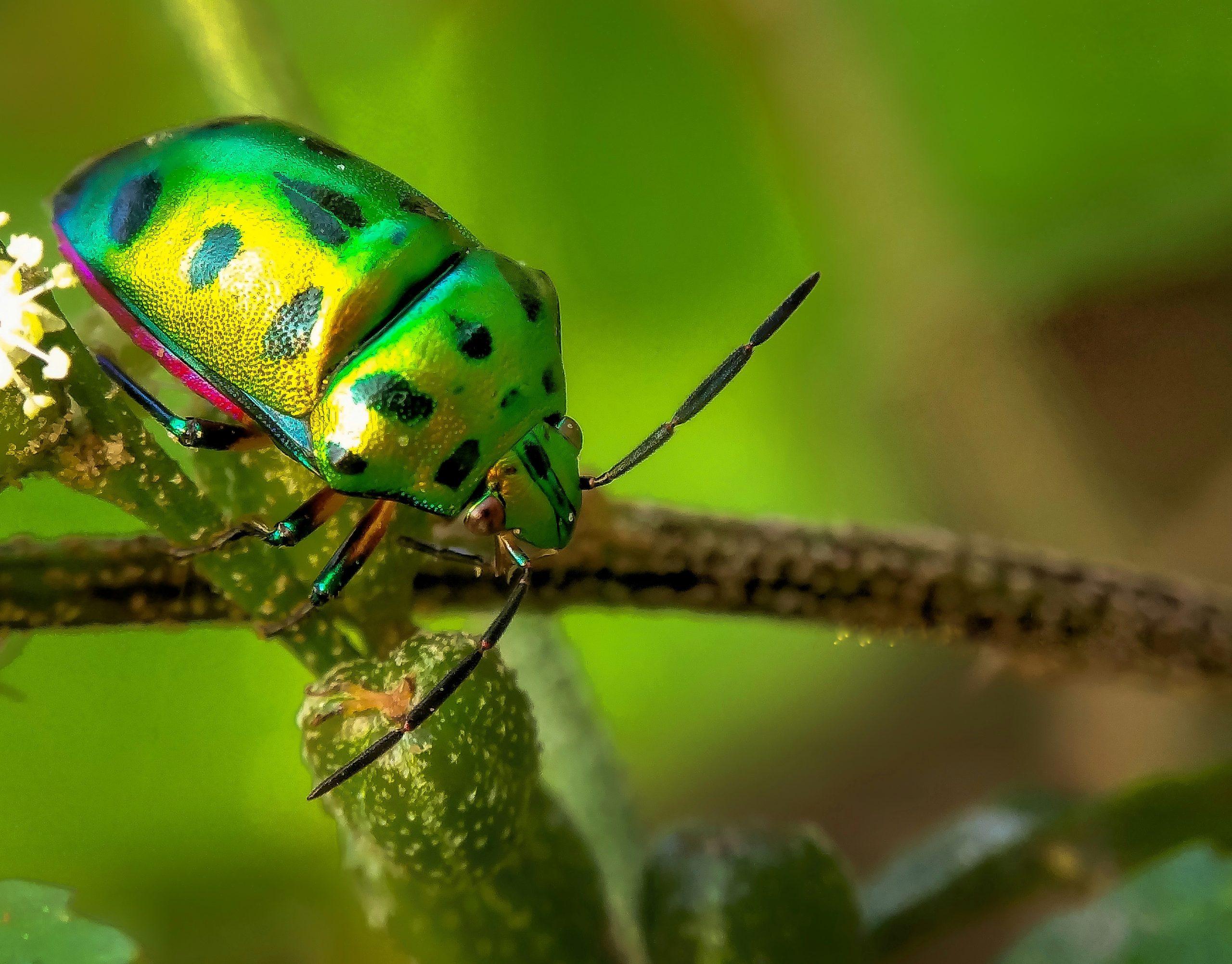 Beetle on plant