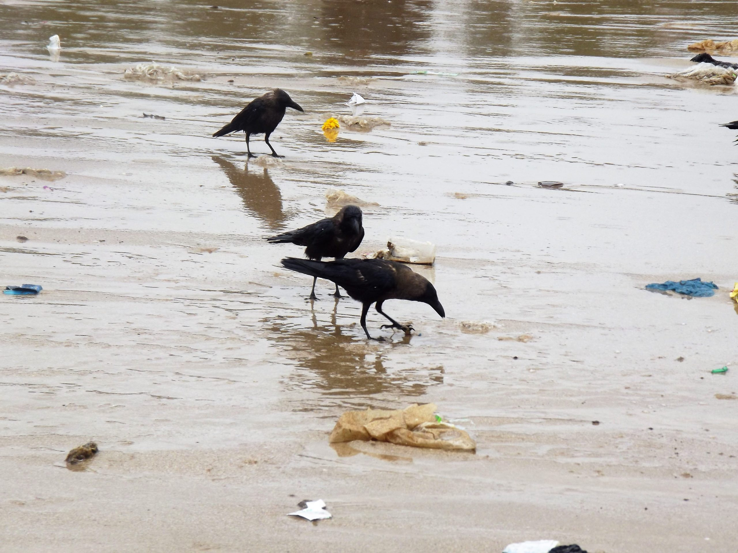 Crows sitting on a beach side