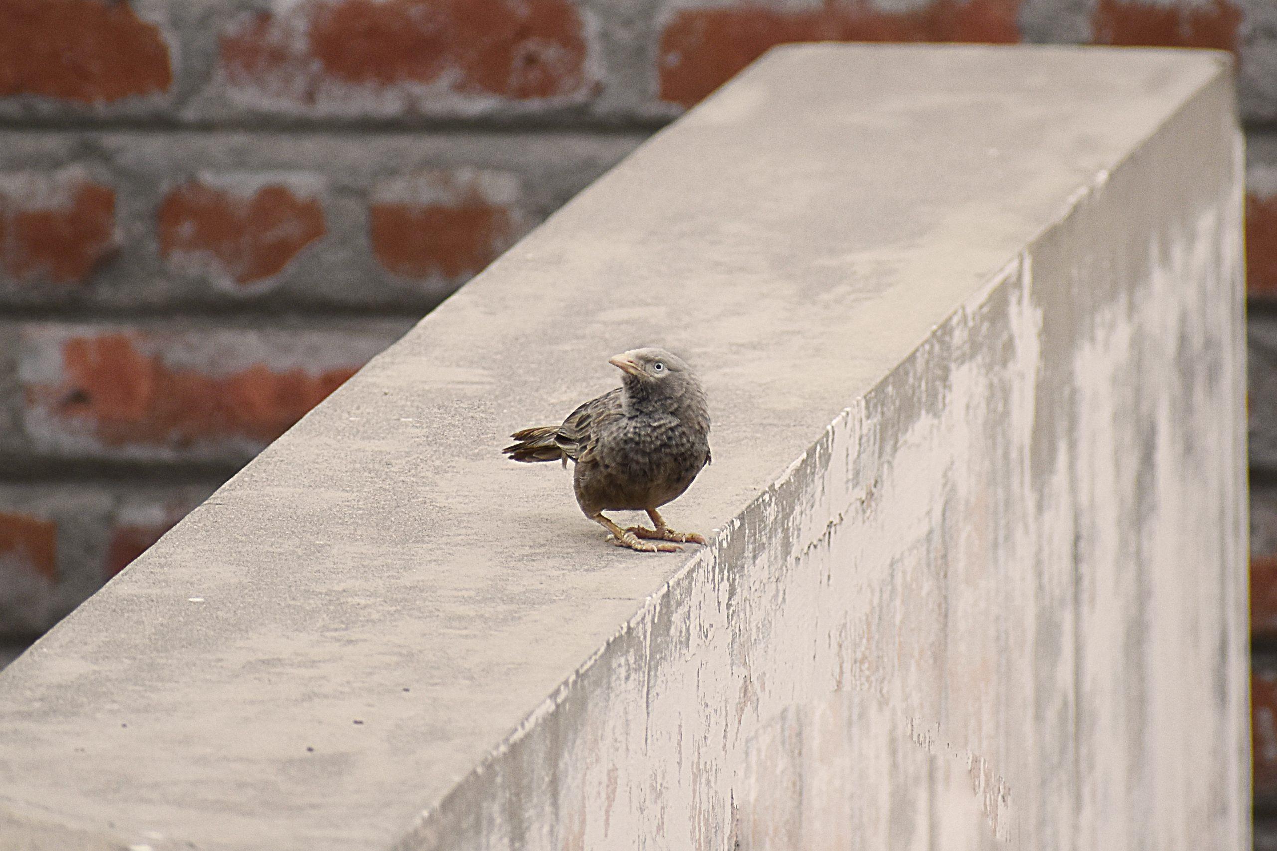 Bird sitting on wall
