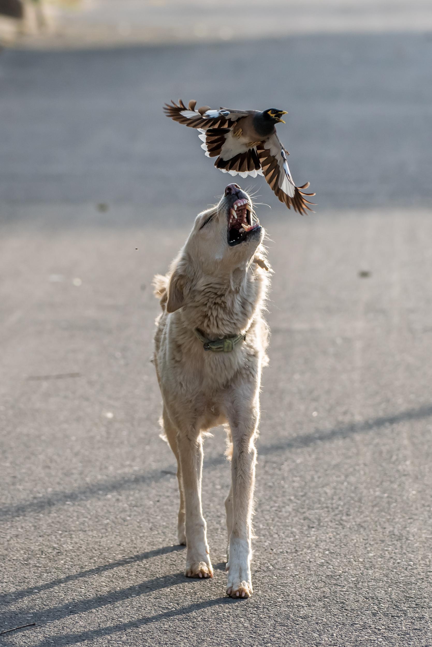 dog catching a bird