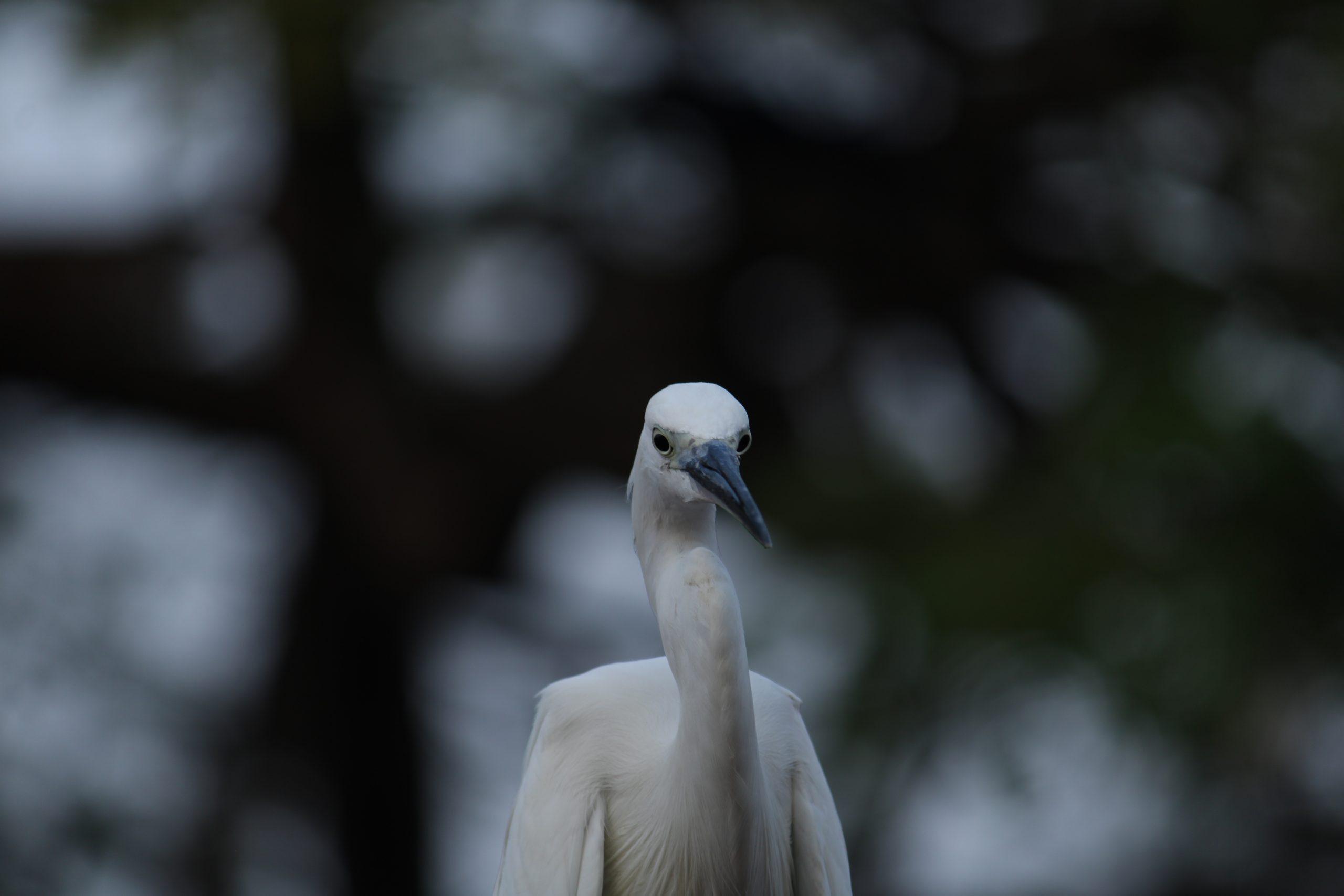 A crane bird