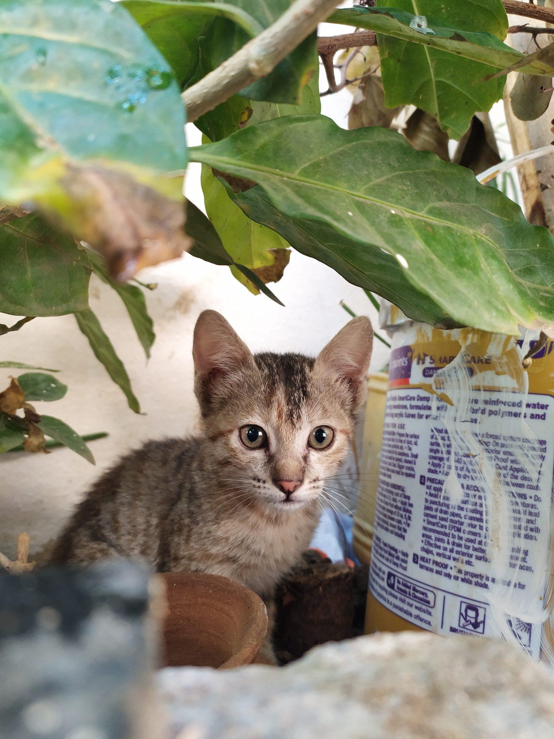 Kitten near plant pot