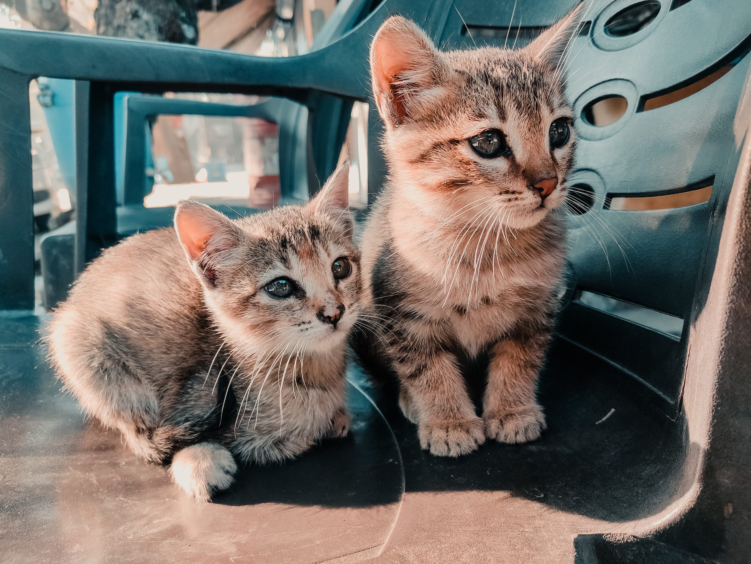 Two kittens sitting on a chair