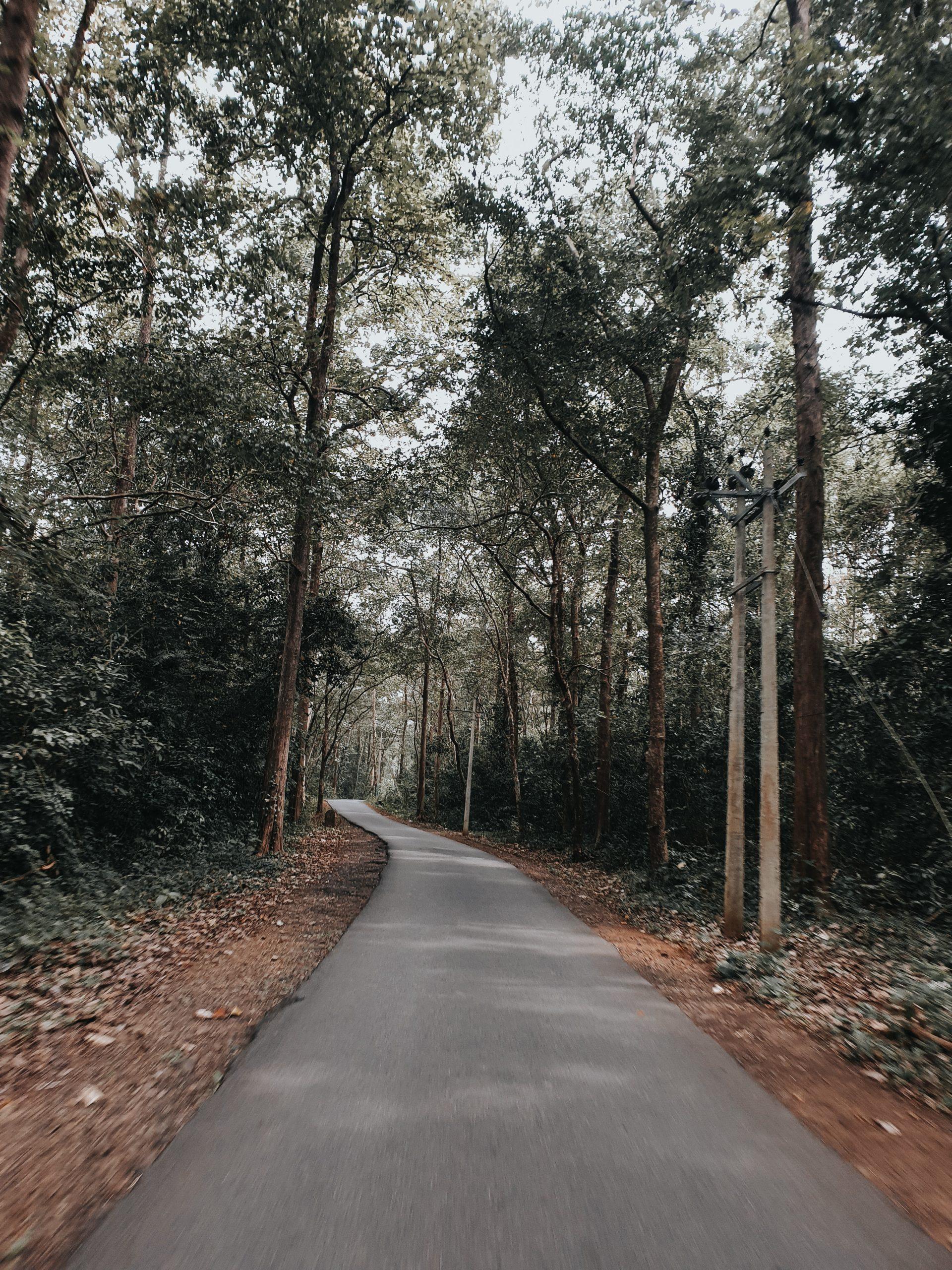 Konni forest road , Pathanamtitta ,Kerala