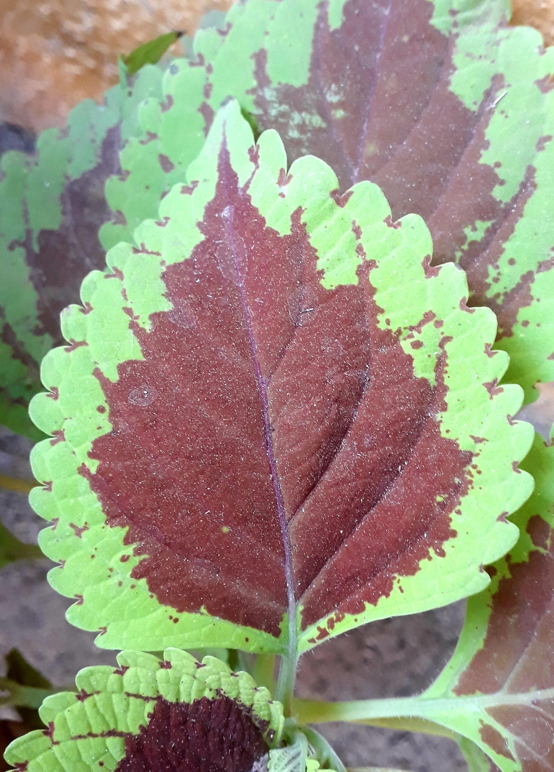 Leaf on plant