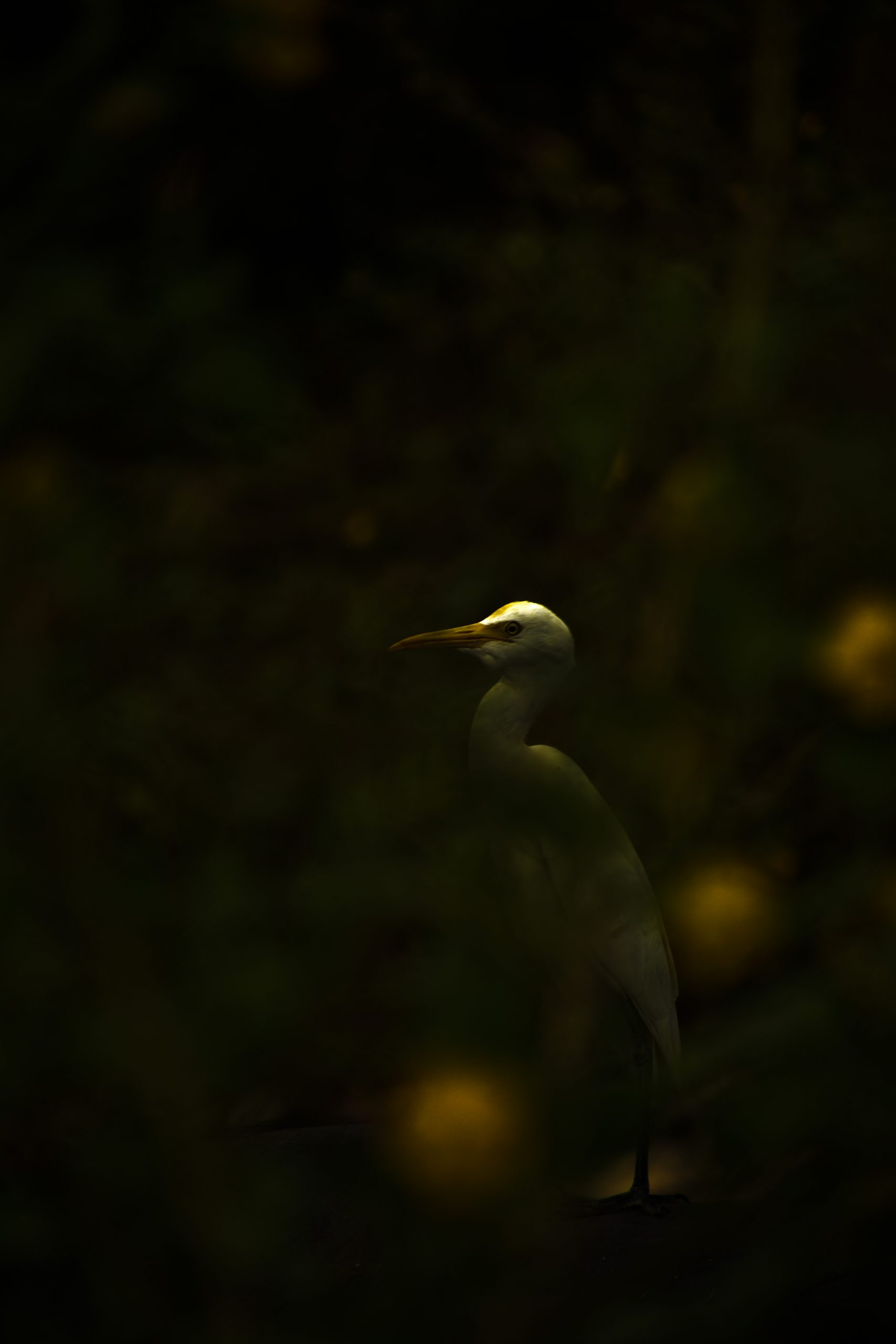 Bird in darkness