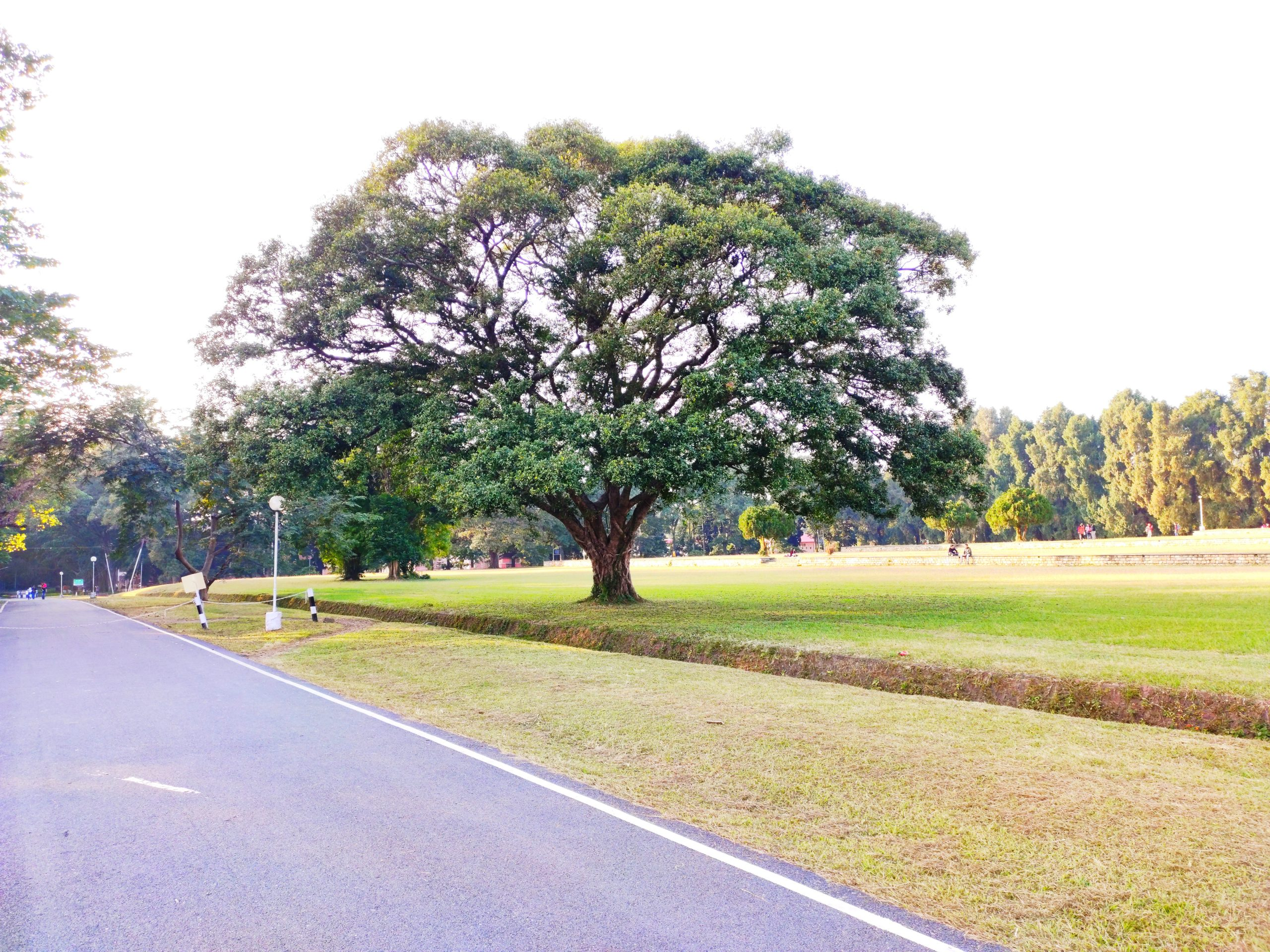 Tree on a roadside