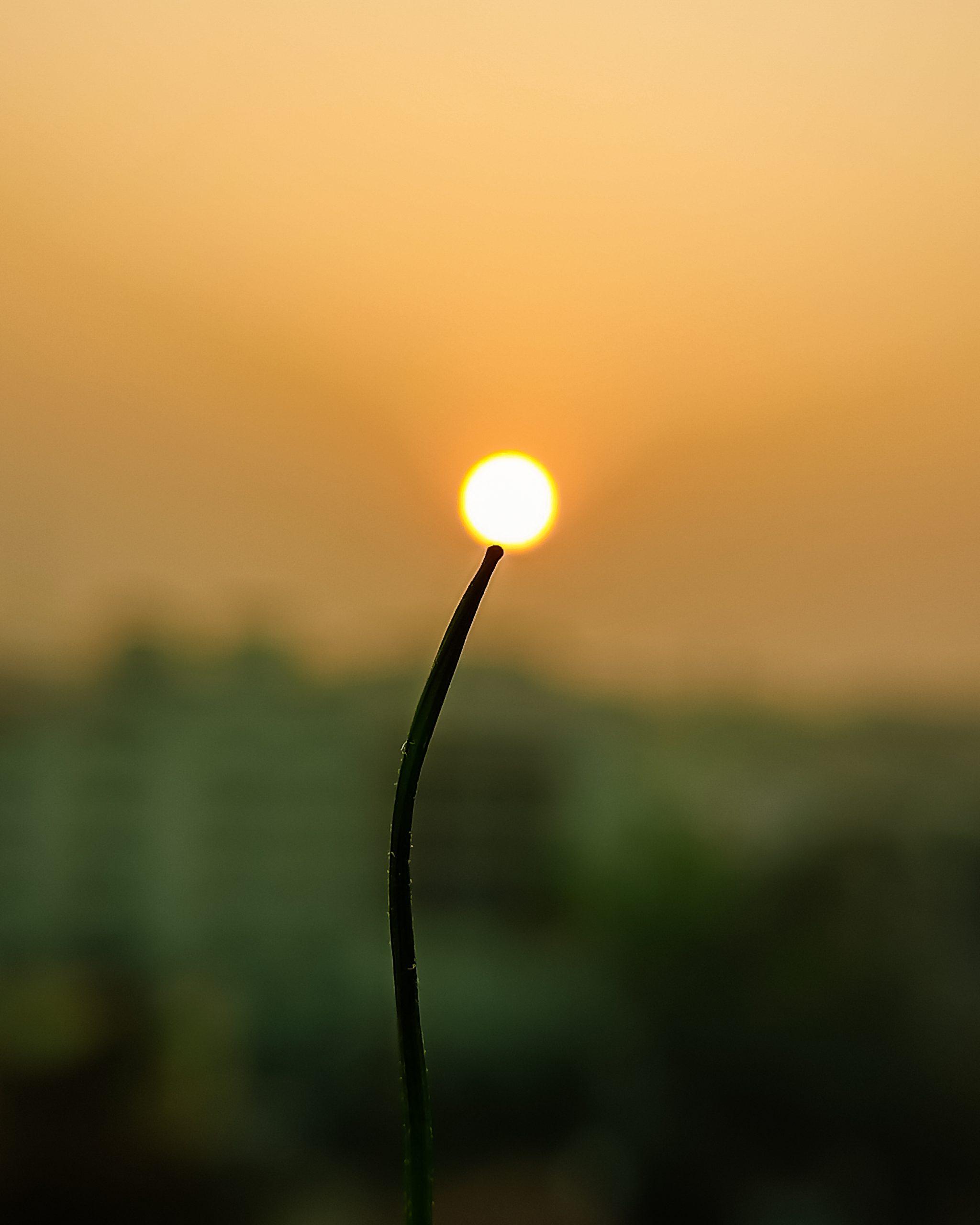 Sunset view through plant stem
