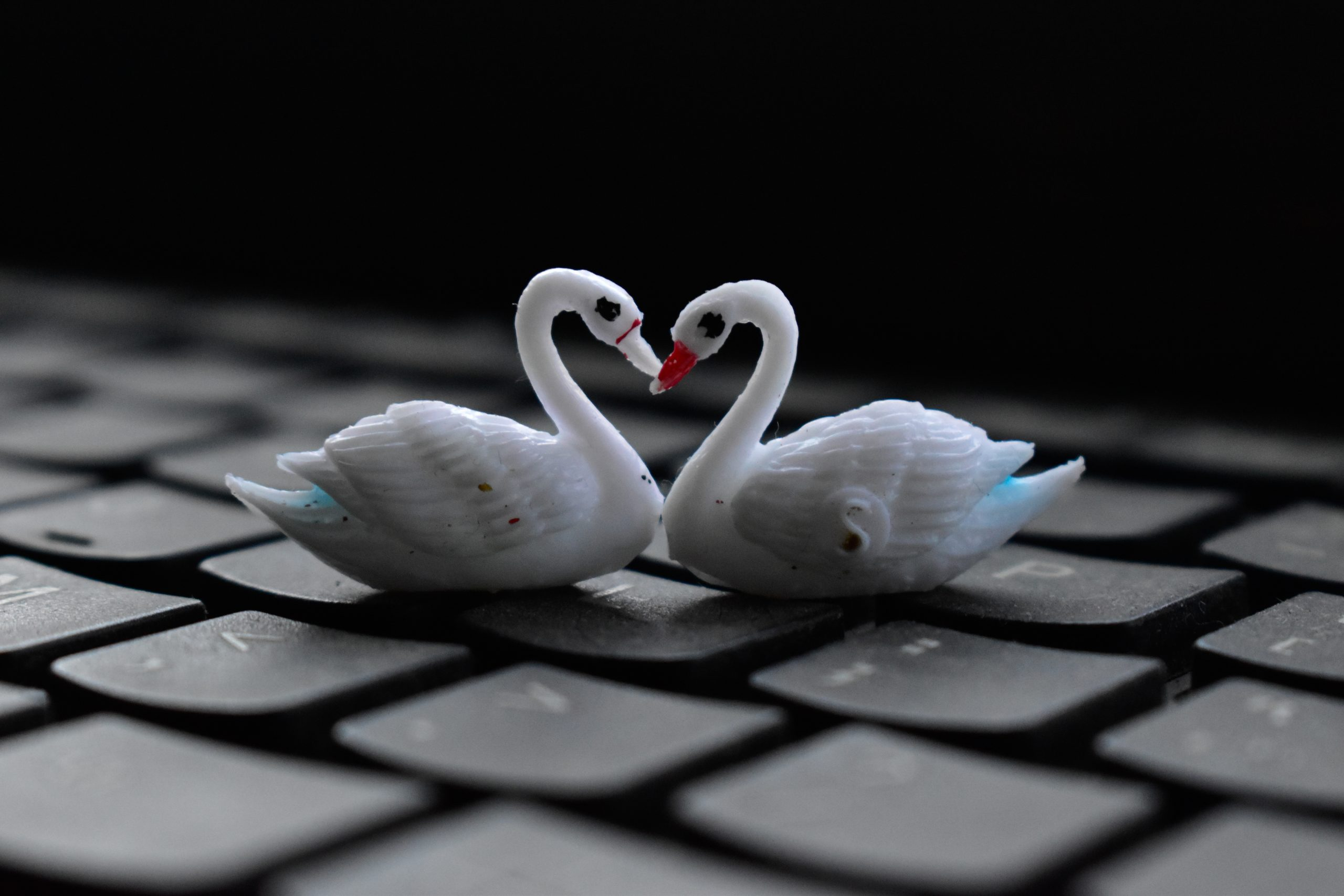 Toy swan pair on key board