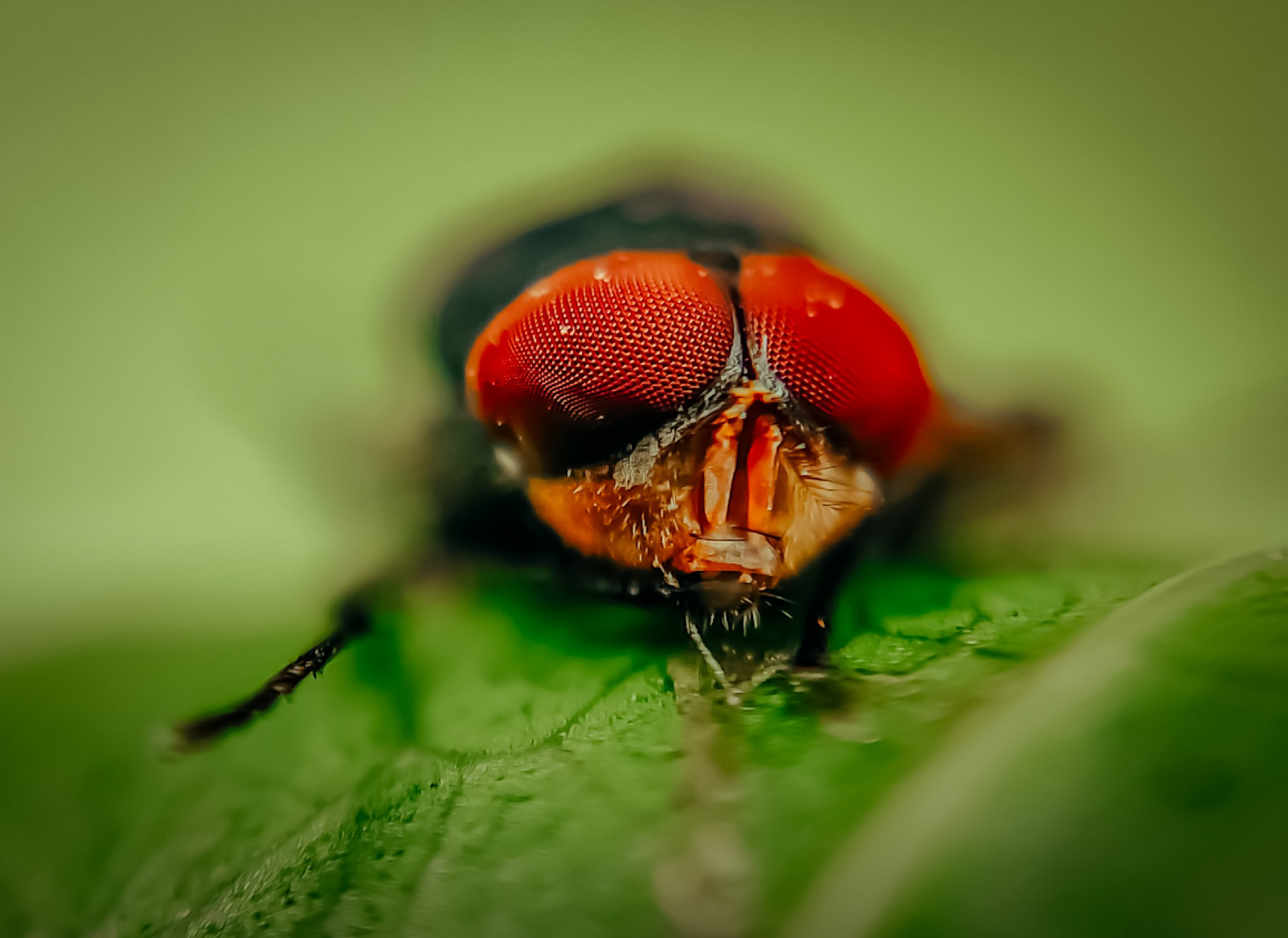 Zoomed landscape of a fly