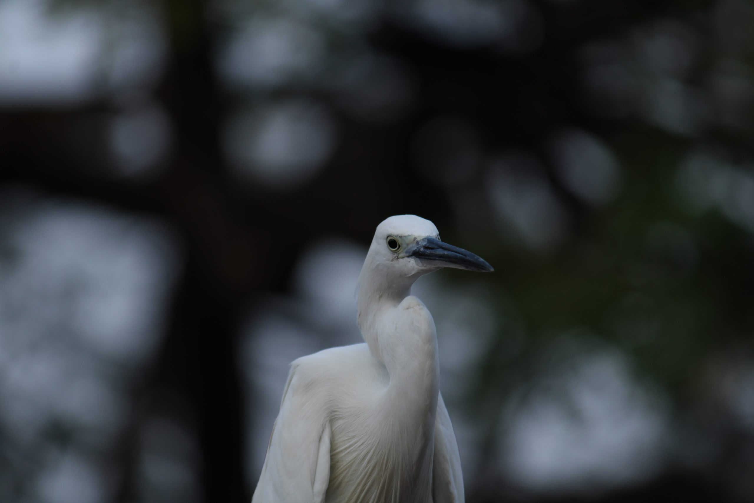 Macro view of a crane bird.