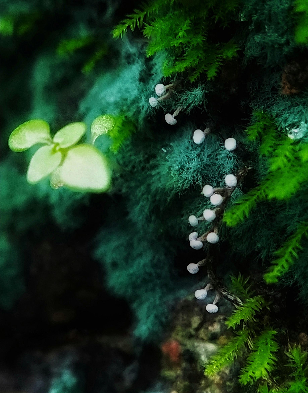 Plant view