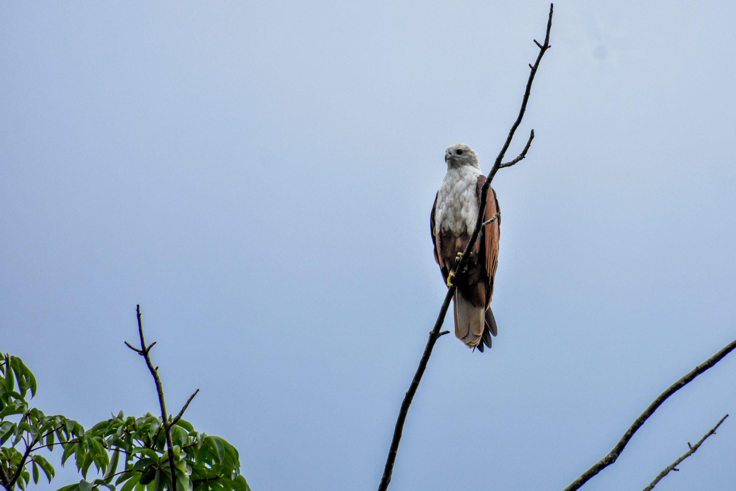 Eagle sitting on branch