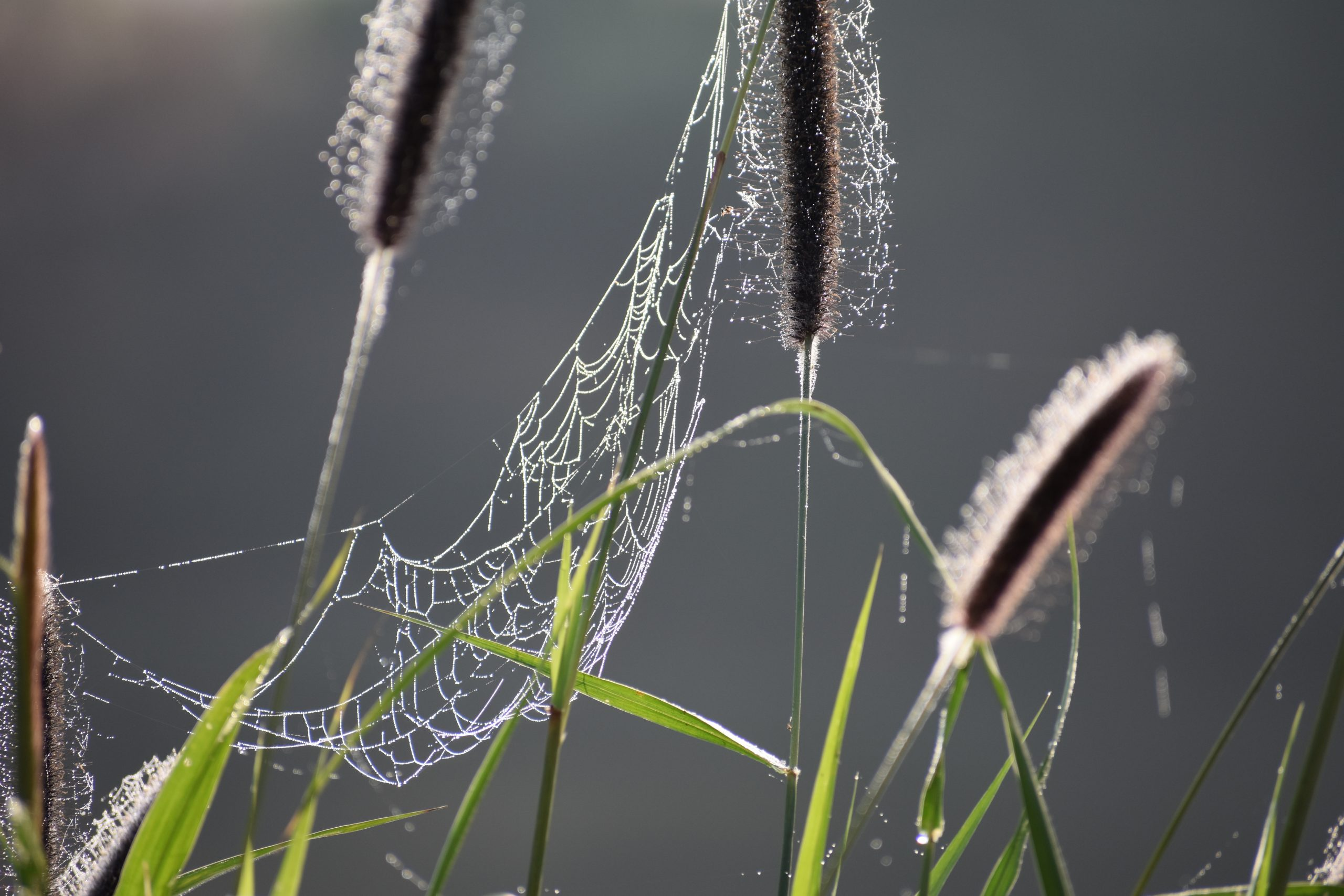 web of spider