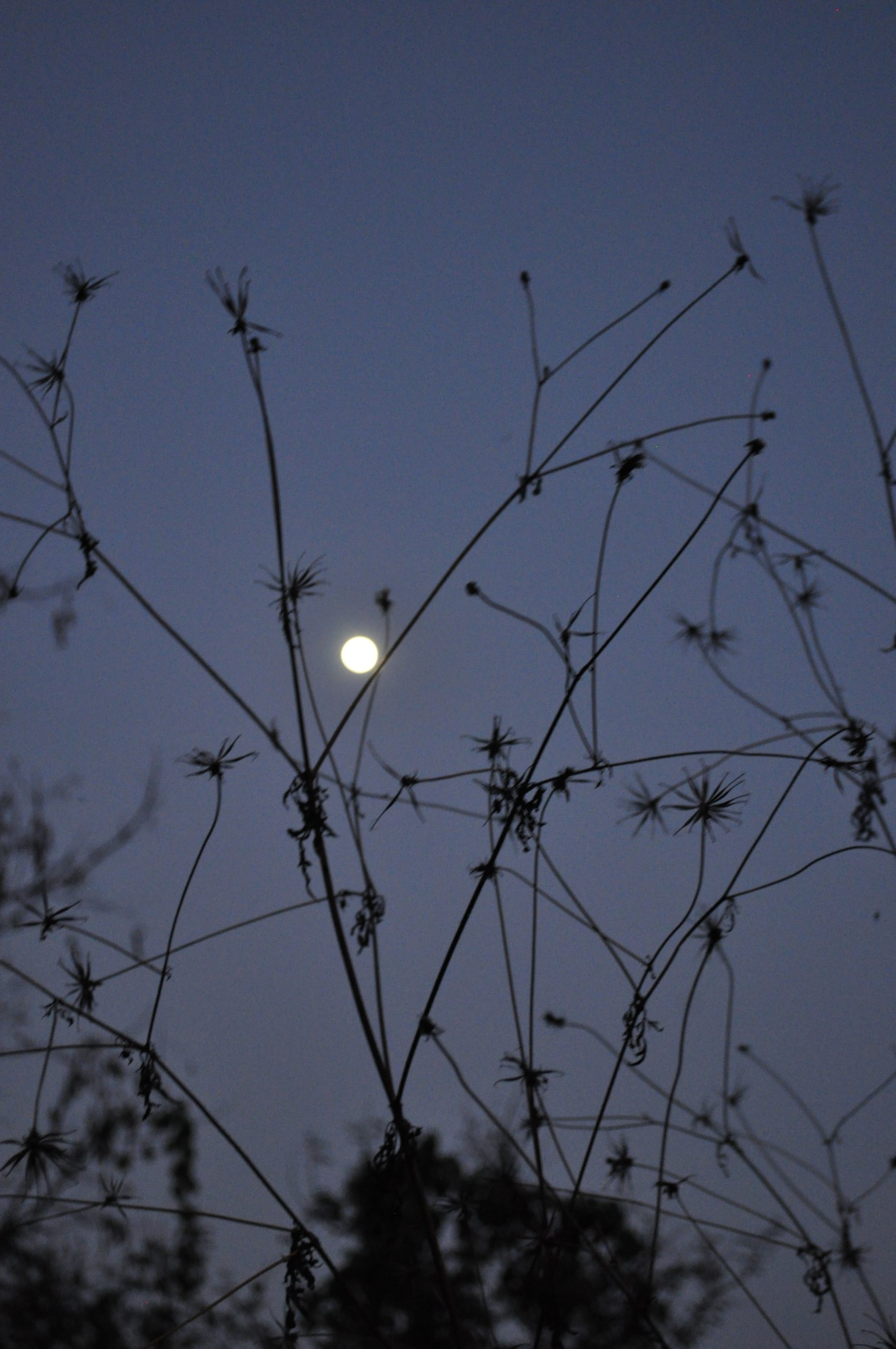 Moon through plants