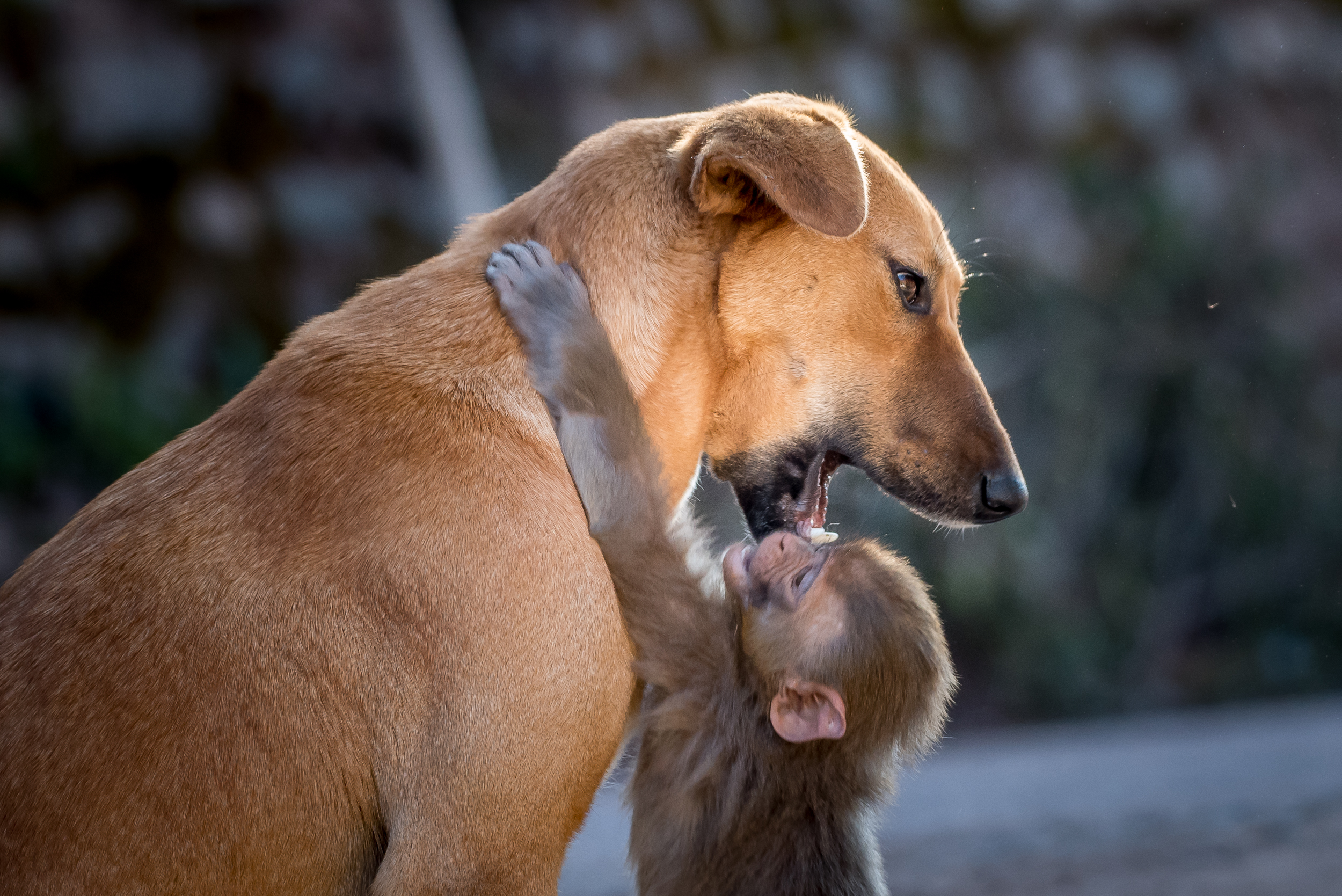 Dog with Infant