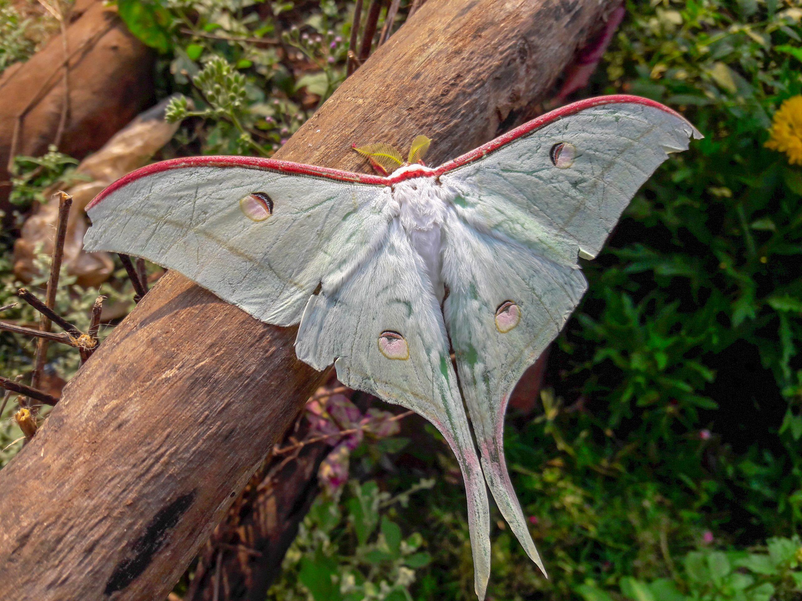 Moth on tree's branch