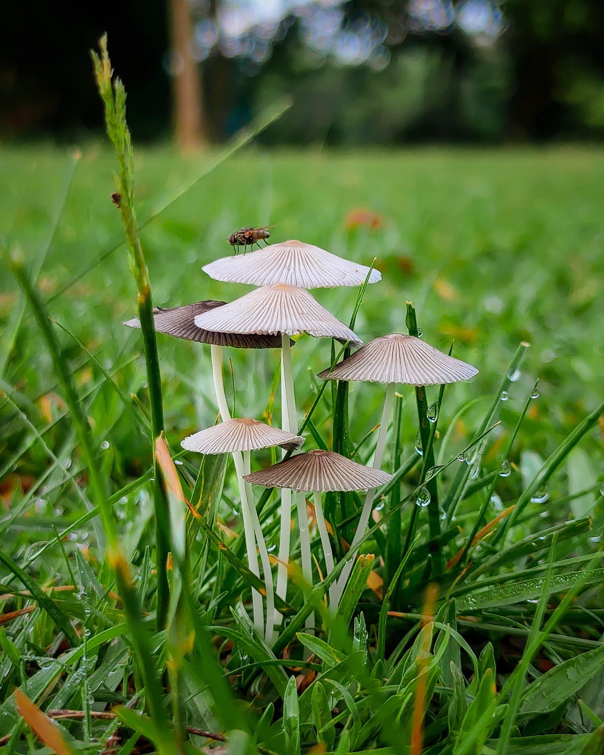 Mushroom blooming in green field