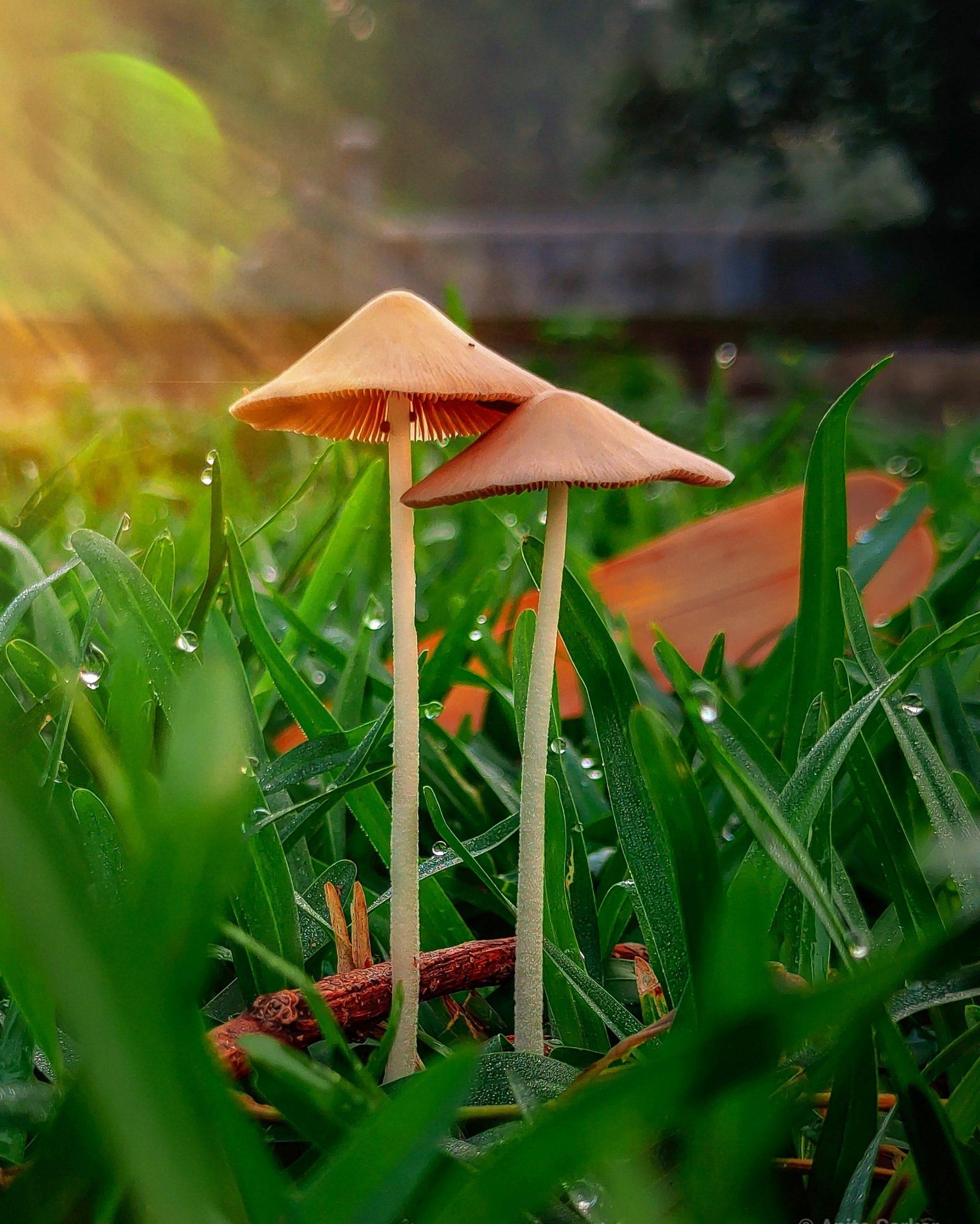 Mushroom blooming in nature