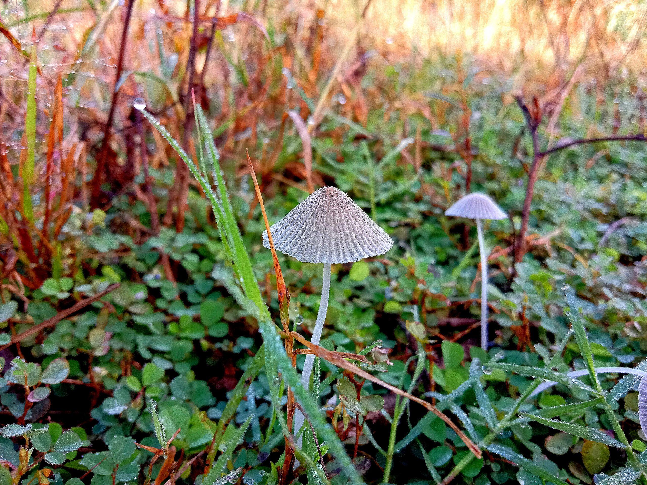 Mushroom plant in farm